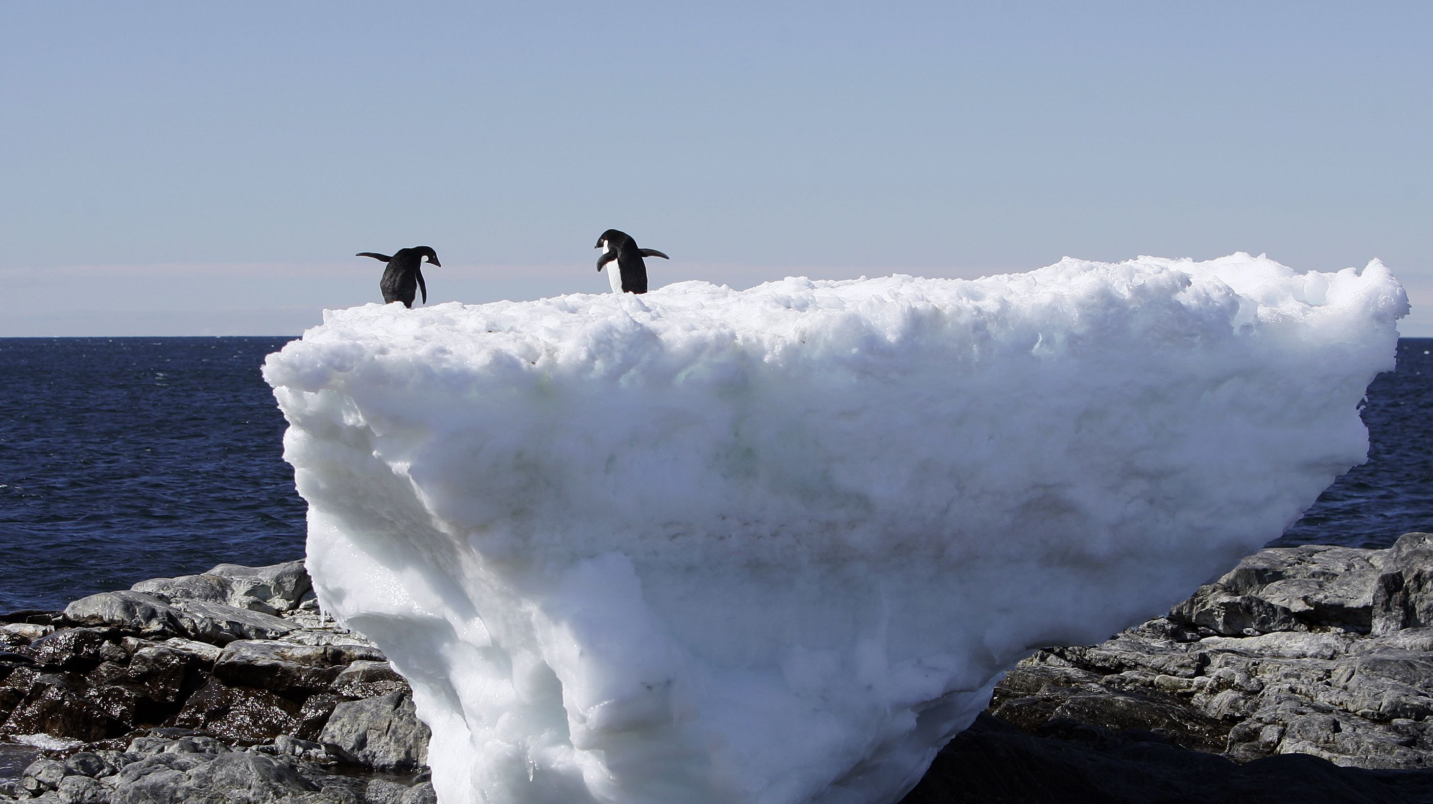 """Two Adelie penguins stand atop a block of melting ice on a rocky shoreline at Cape Denison, Commonwealth Bay, in East Antarctica January 1, 2010. Russia and the Ukraine on November 1, 2013 again scuttled plans to create the world's largest ocean sanctuary in Antarctica, pristine waters rich in energy and species such as whales, penguins and vast stocks of fish, an environmentalist group said. The Commission for the Conservation of Antarctic Marine Living Resources wound up a week-long meeting in Hobart, Australia, considering proposals for two """"marine protected areas"""" aimed at conserving the ocean wilderness from fishing, drilling for oil and other industrial interests. Picture taken January 1, 2010. To match story ANTARCTIC-ENVIRONMENT/ REUTERS/Pauline Askin"""