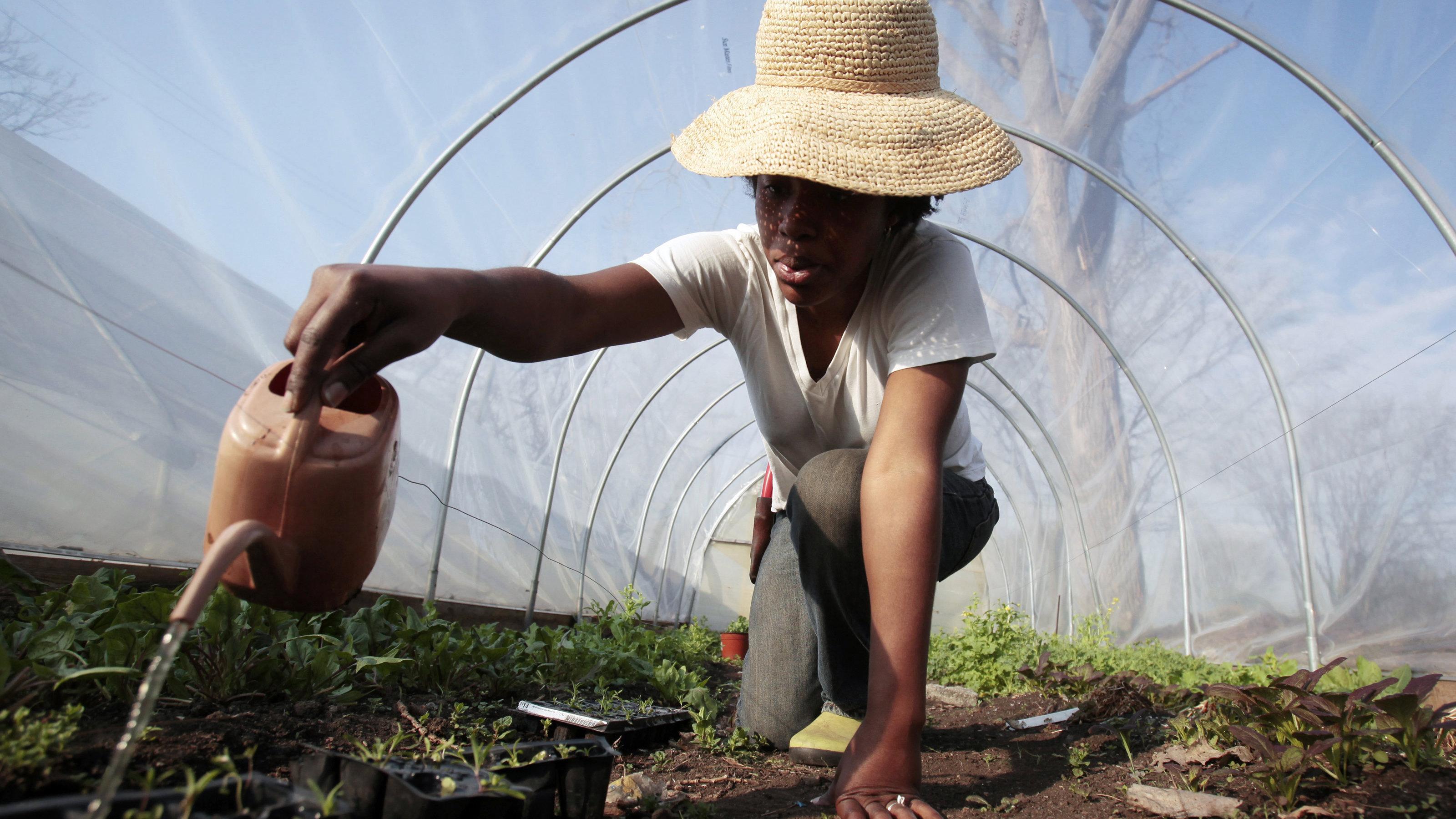 detroit urban farm