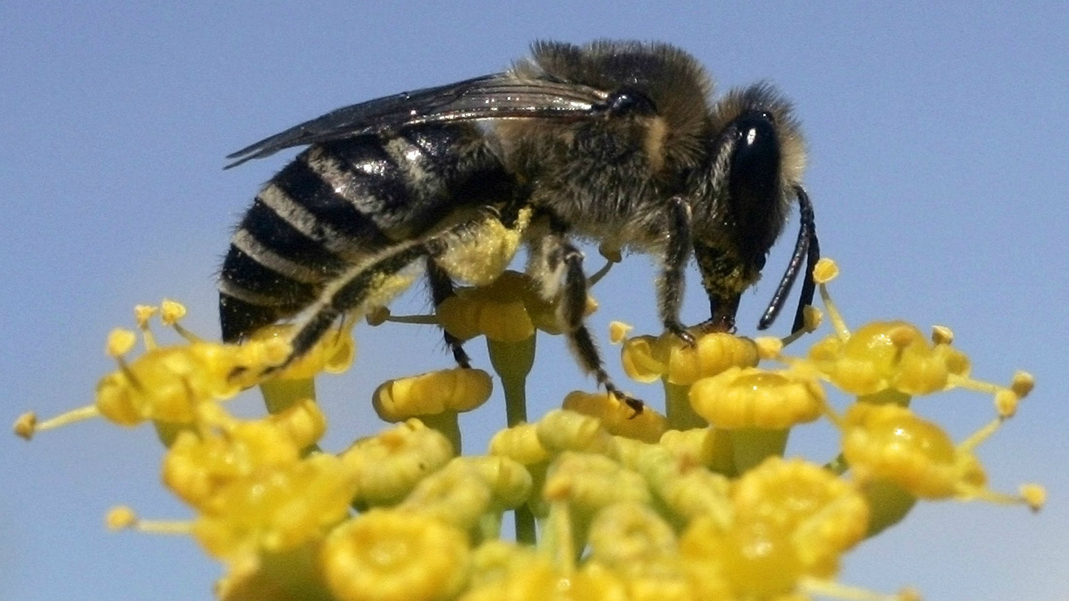 The world is finally trying to save the bees — Quartz