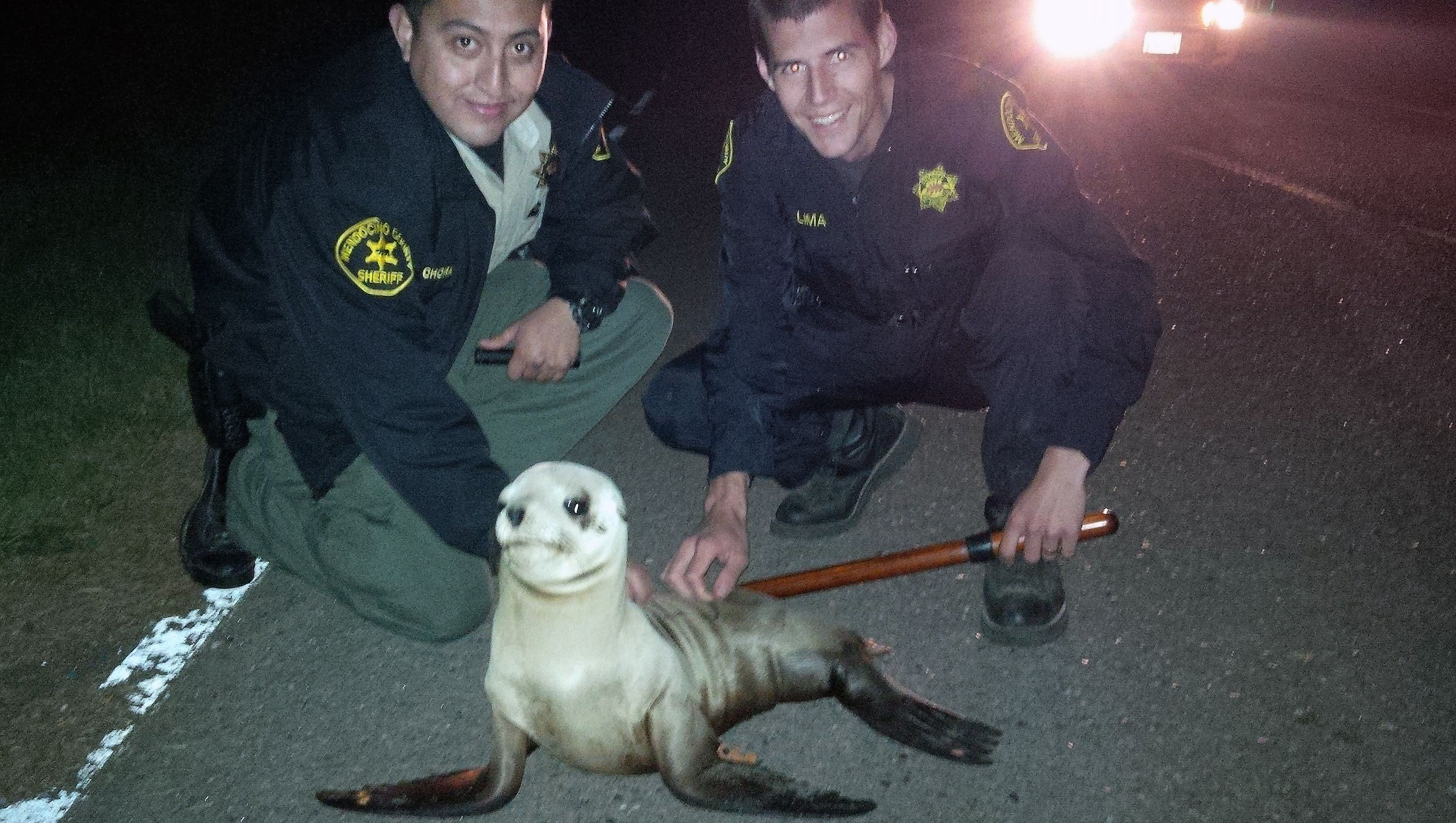 This April 19, 2015 photo provided by the Mendocino County Sheriff shows Mendocino County Deputy Sergio Chora-Alvarado, left and Deputy Ze Manuel Limaa, pose for a photo with a stranded Sea Lion pup. The rescued the sea lion pup waddled about a quarter-mile from the ocean. Mendocino County sheriff's deputies patrolling Highway 1, south of Fort Bragg, spotted the animal moving slowly in dark, dense fog on Sunday. They discovered the animal was a sea lion pup weighing about 20 pounds with a tag attached to its front flipper (Mendocino County Sheriff via AP