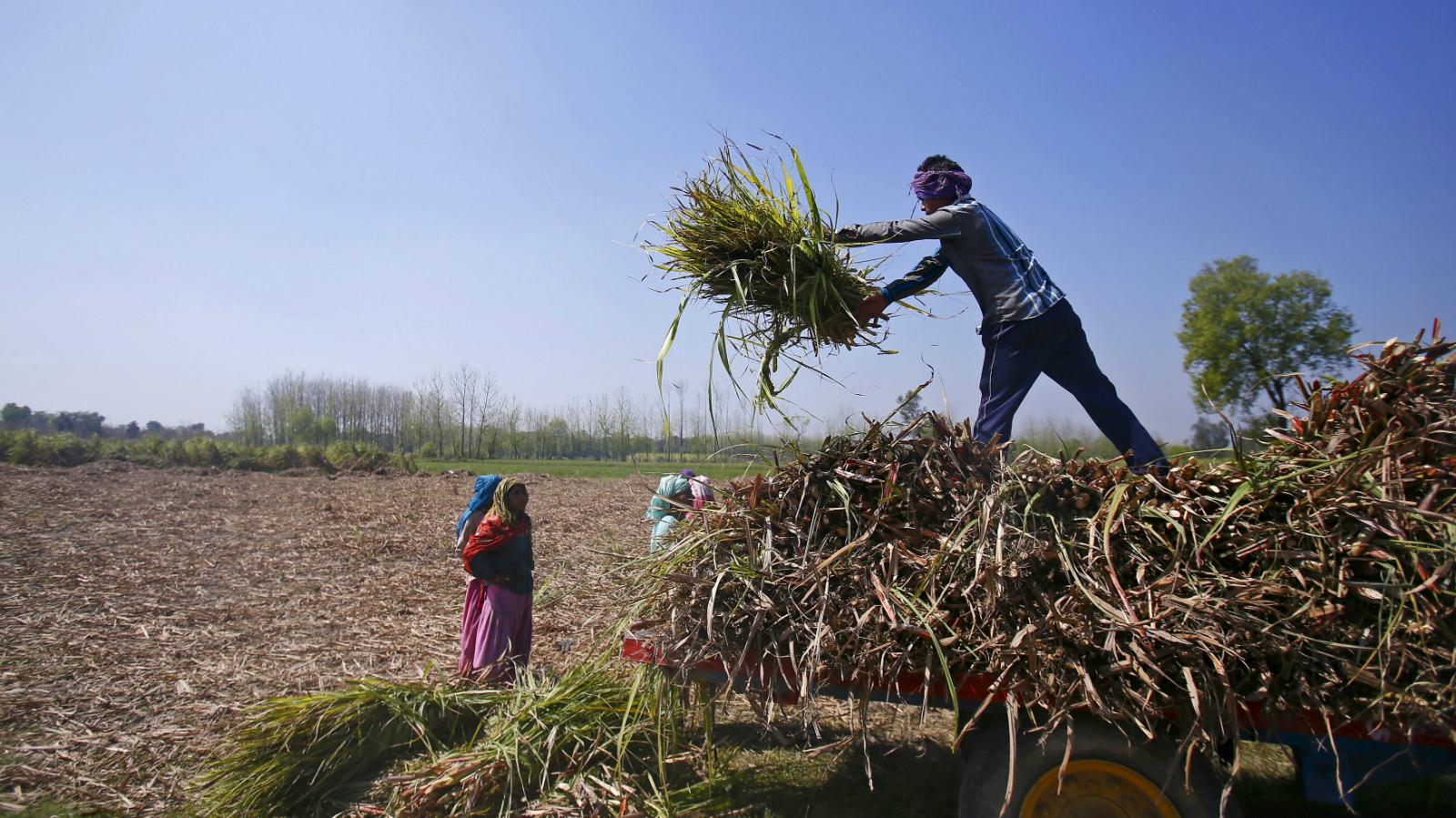 India-farmer-land