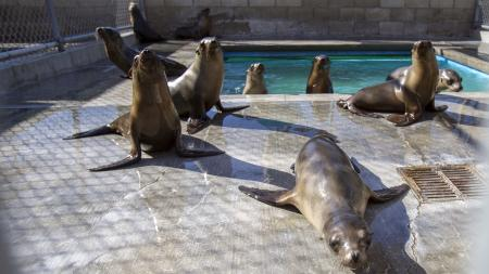 Sea lion pups are pictured in their enclosure after being rescued at the Pacific Marine Mammal Center in Laguna Beach, California March 17, 2015. Animal rescue centers in California are being inundated with stranded, starving sea lion pups, raising the possibility that the facilities could soon be overwhelmed, the federal agency coordinating the rescue said. REUTERS/Mario Anzuoni