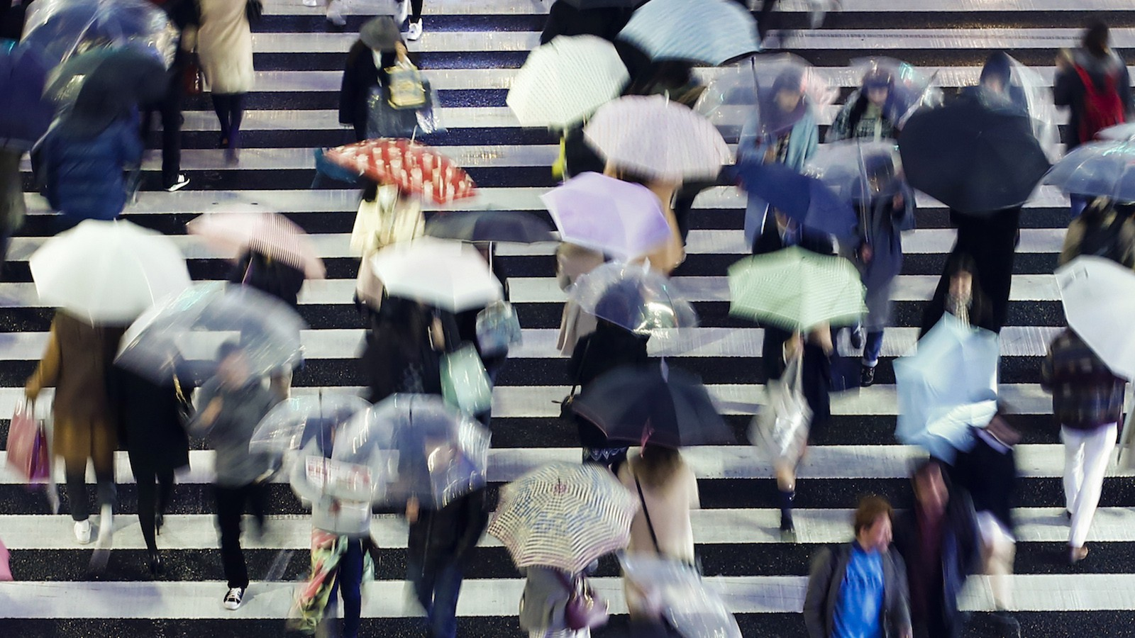 People carry umbrellas as they walk across a zebra crossing during heavy rain in Tokyo January 15, 2015. (JAPAN - Tags: ENVIRONMENT SOCIETY) - RTR4LITO