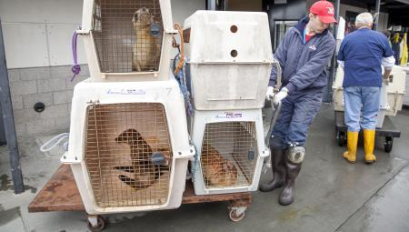 epa04736357 (07/20) A volunteer moves incoming malnourished and dehydrated sea lion pups that have been stranded along the northern California coast to their new temporary pens at the Marine Mammal Center in Sausolito, California, USA, 21 April 2015. Wildlife services in California are being pushed to their limits this year. Since January 2015, every month has set a record in sea lion 'strandings', mostly sea lion pups, according to the National Oceanic and Atmospheric Administration. EPA/PETER DASILVA PLEASE REFER TO ADVISORY NOTICE (epa04736350) FOR FULL FEATURE TEXT