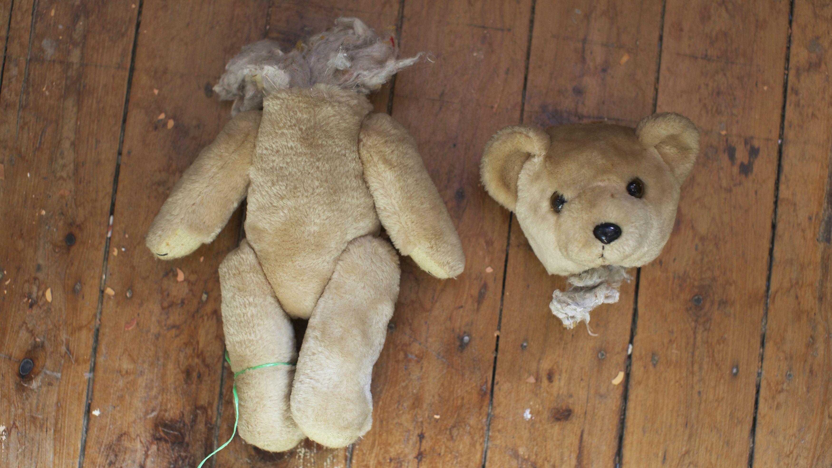 Teddy bear in peril