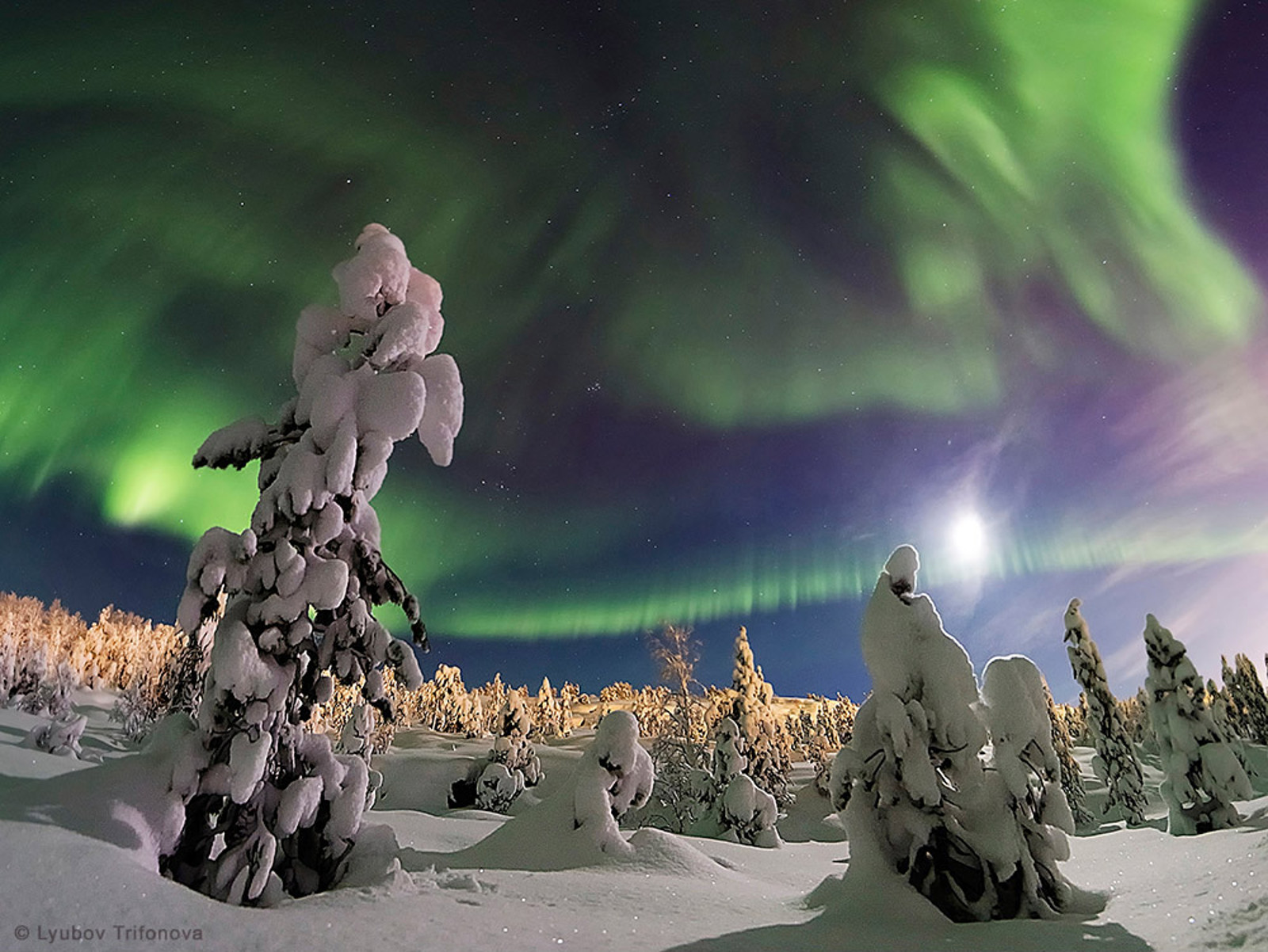 """The Enchanted Forest"" in Murmansk, Russia"