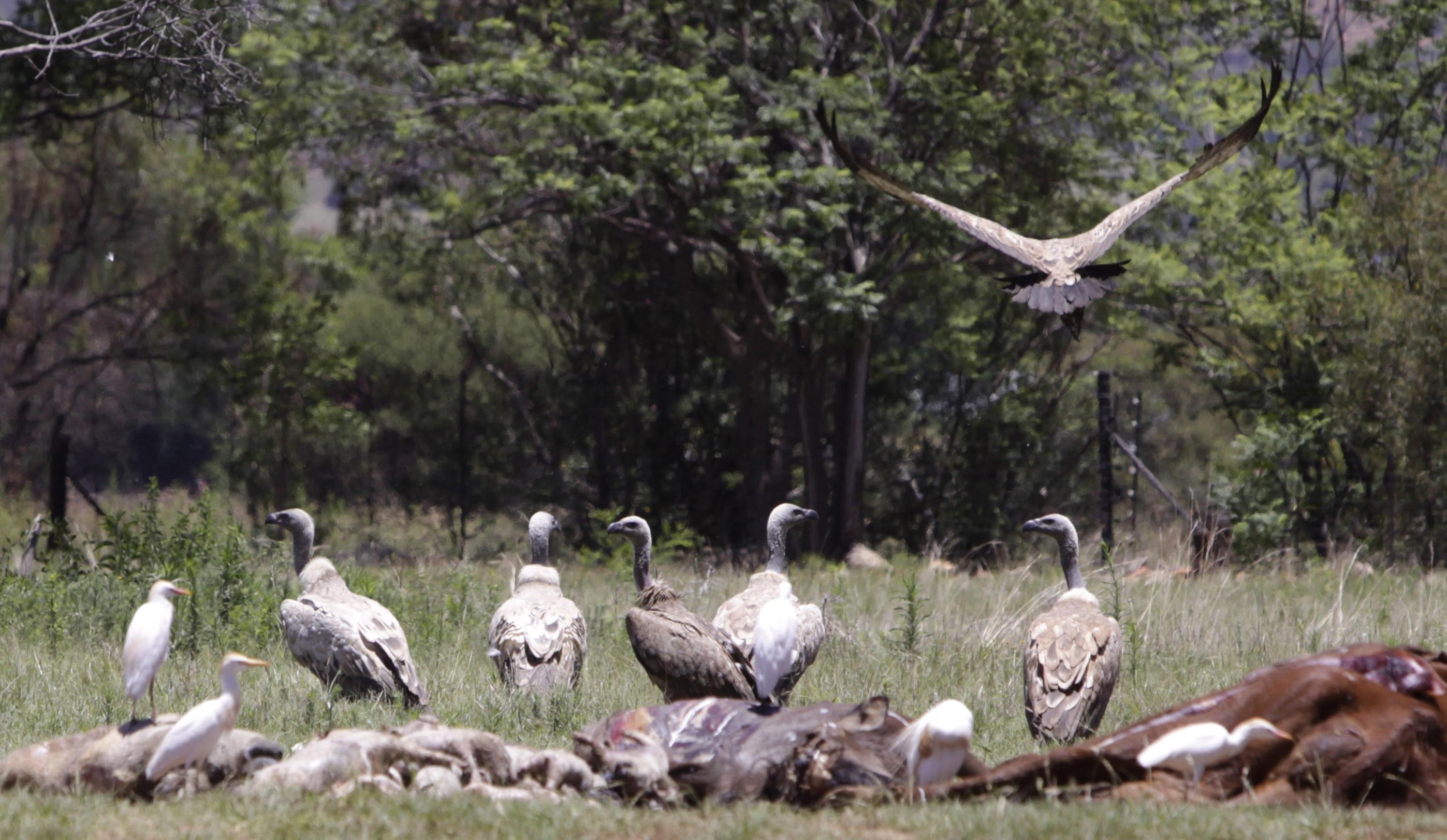 Travel Trip Vulture Culture