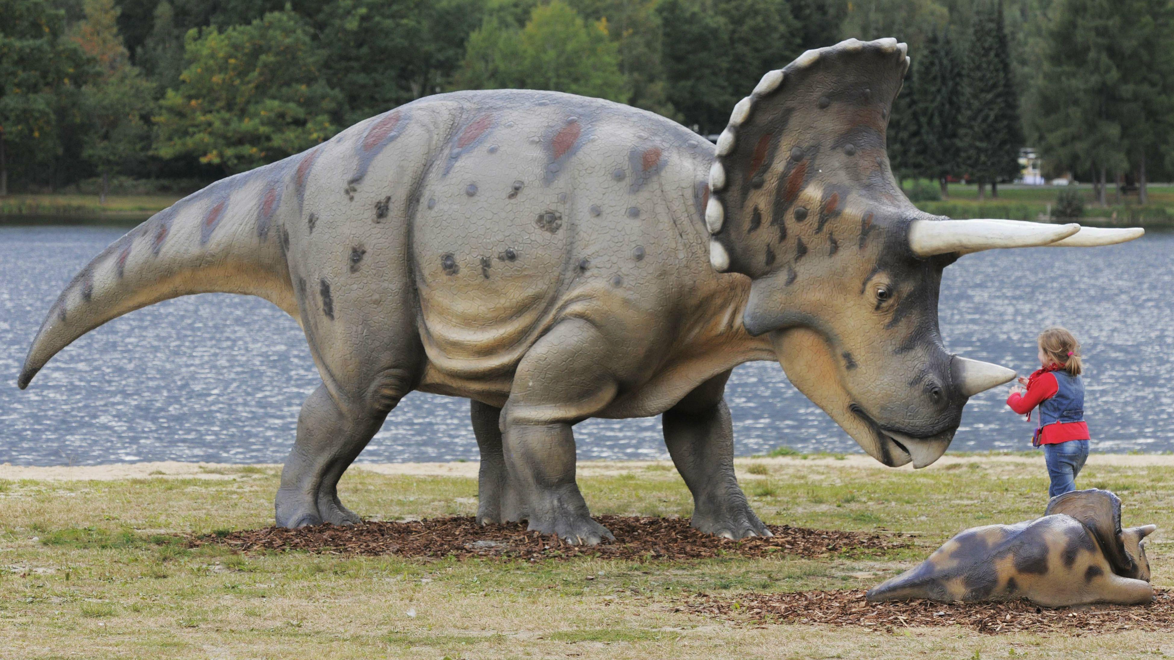 All Hail Triceratops King Of The Vegetarian Dinosaurs Quartz