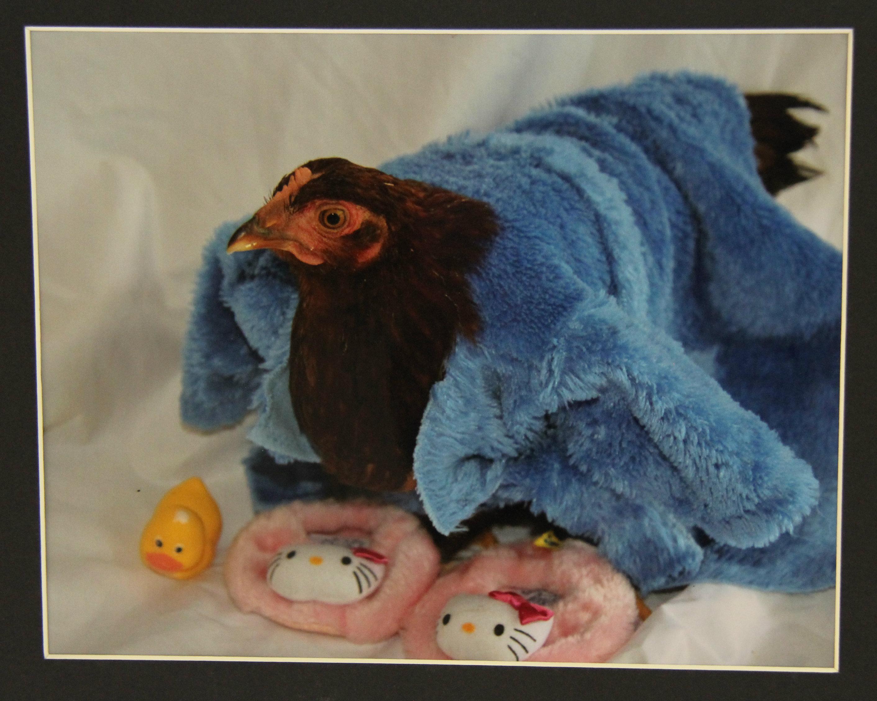 8- avian flu poultry show hello kitty 2