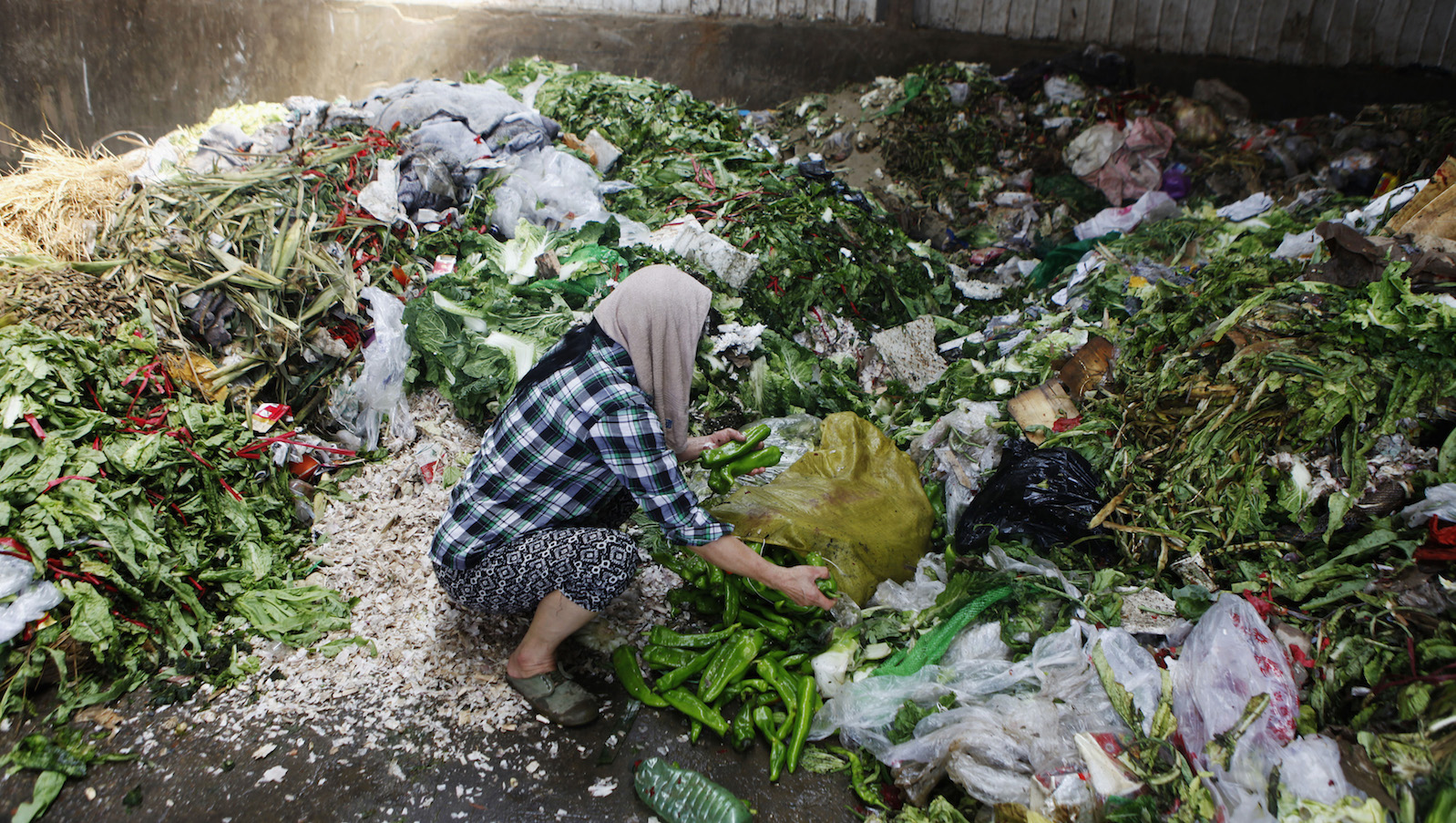 A woman picks up vegetables discarded by food vendors at a garbage dump site of a wholesale market in Xi'an, Shaanxi province July 27, 2014. About 60 tonnes of vegetables are discarded every day in the market due to damages mainly caused by hot weather. Many residents come to pick them up at a garbage dump site to eat or feed their livestock, local media reported. Picture taken July 27, 2014.