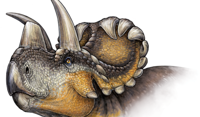 An artist rendering of the new Wendiceratops pinhornensis