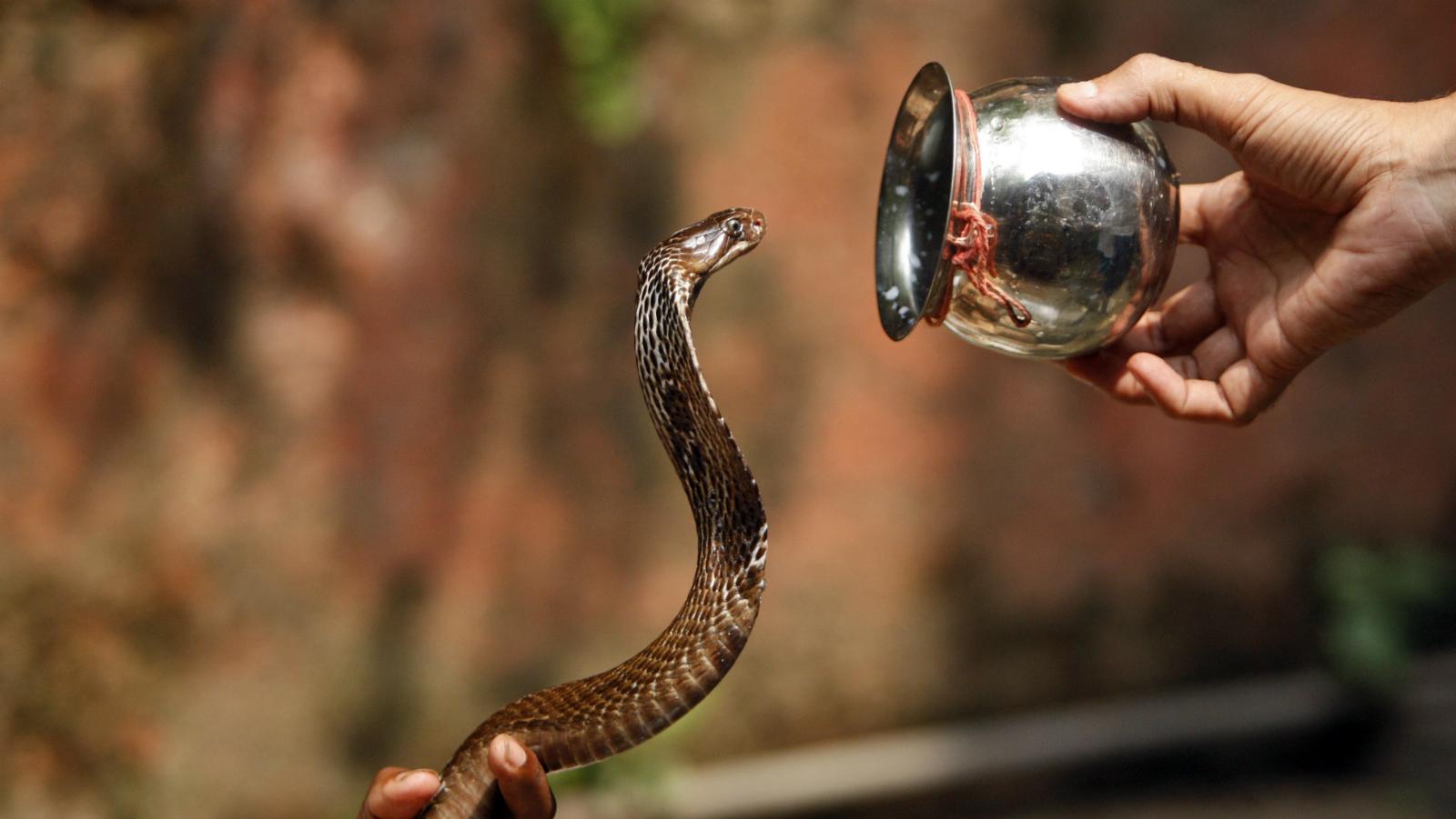 India-snake-lethal
