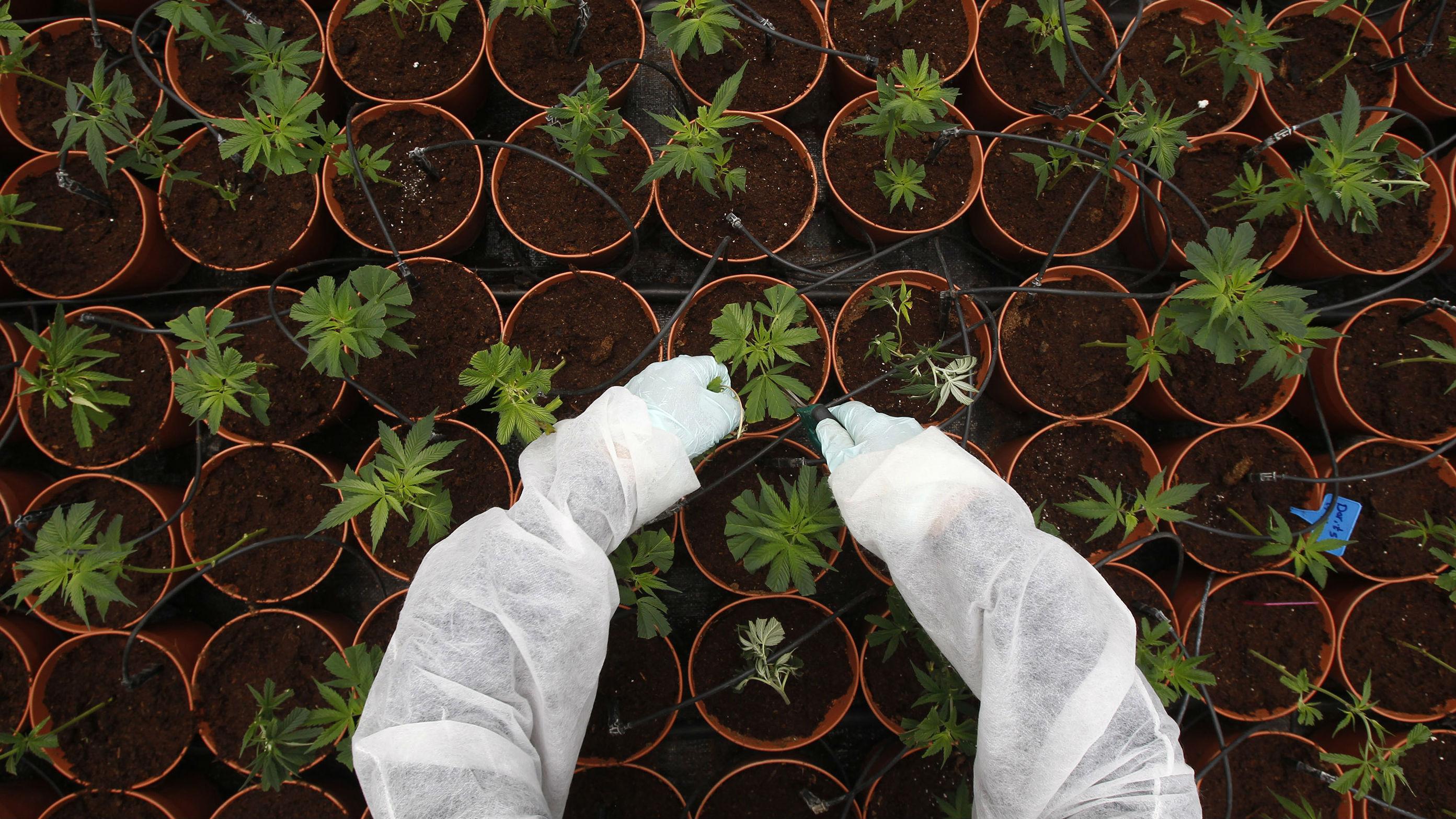 What illegal drugs cost on the dark web — Quartz