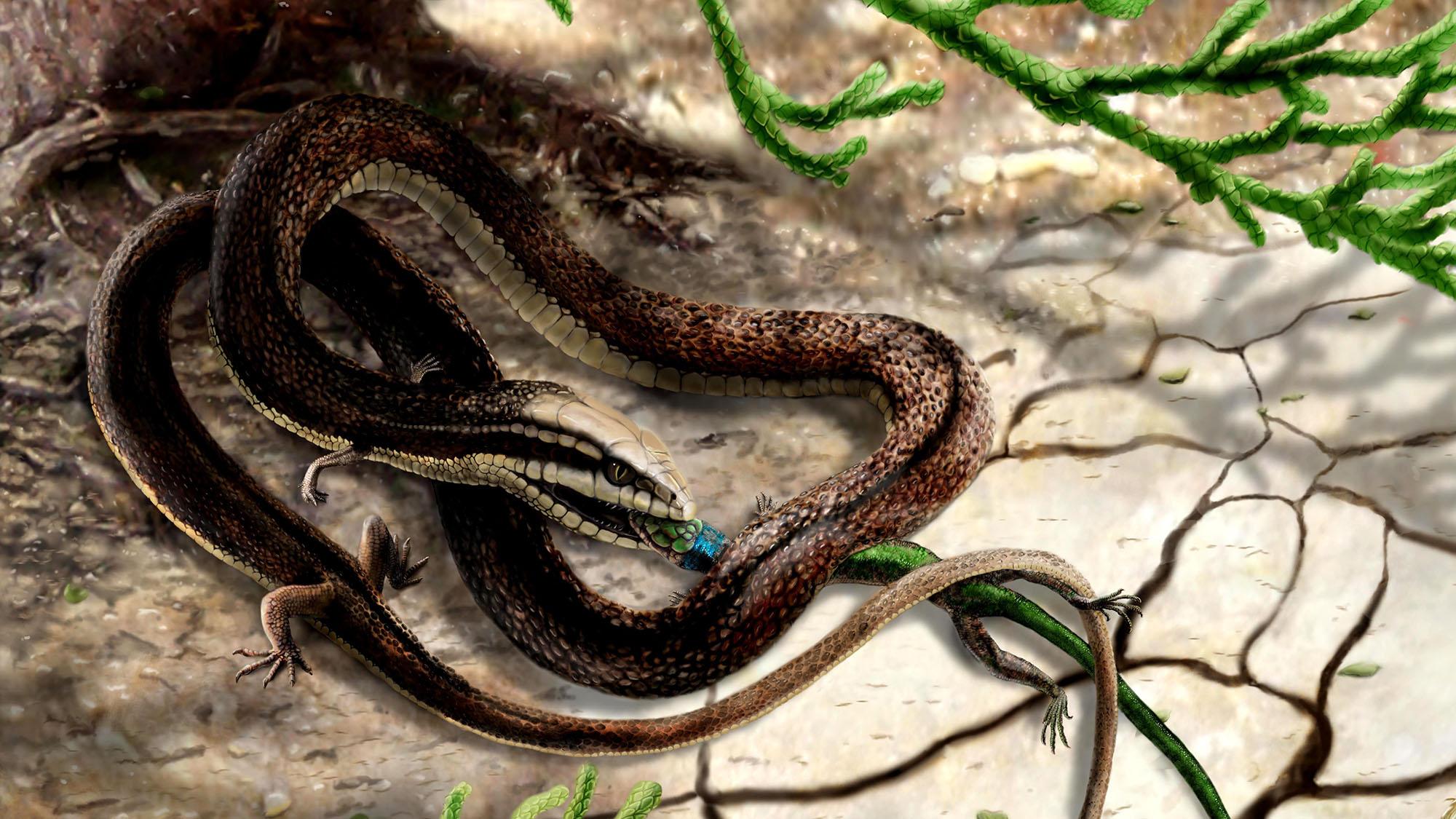 Four-legged snake