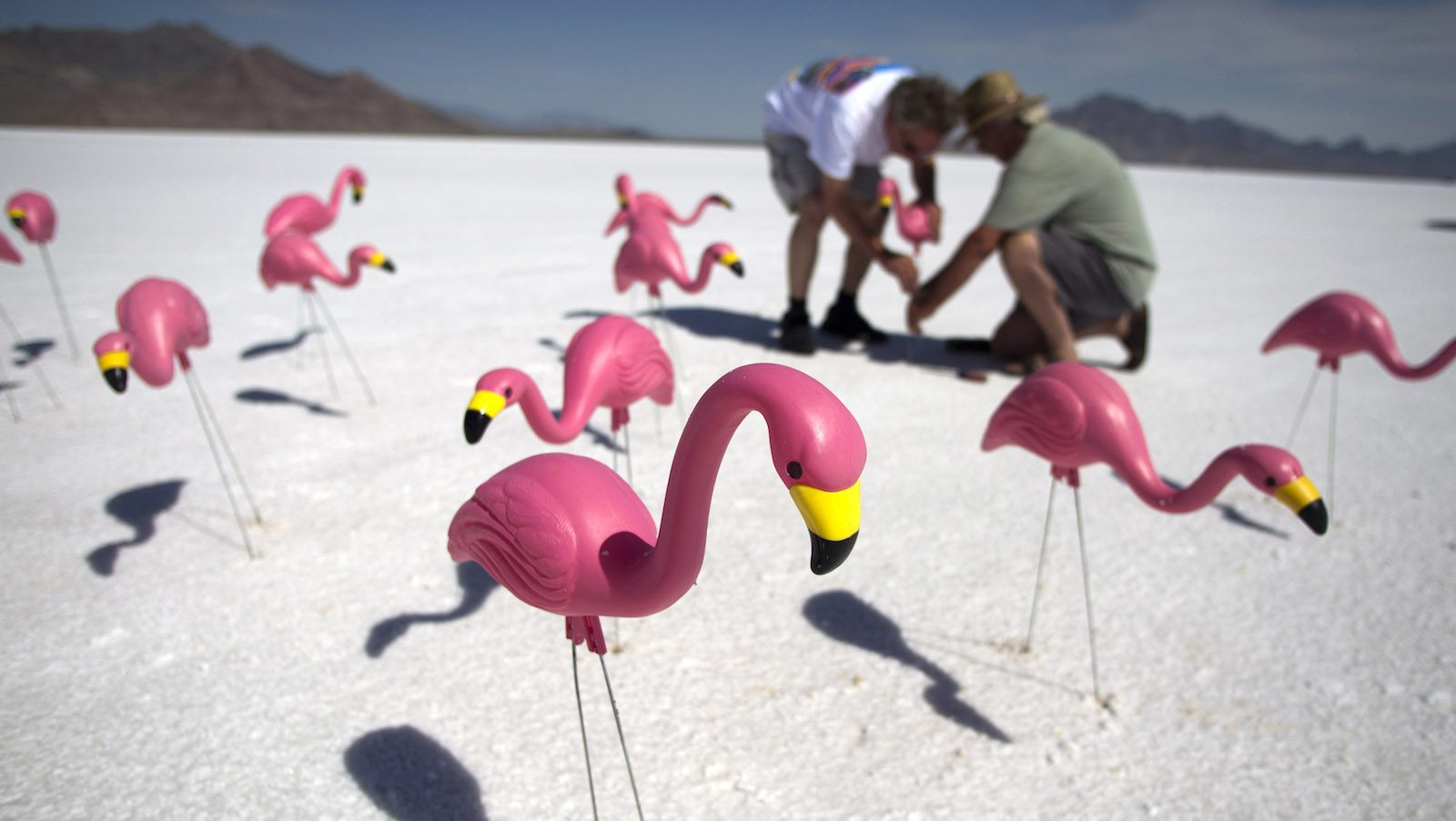 Race fans place plastic pink flamingos in the salt near their viewing area during the third day of the 63rd annual Bonneville SpeedWeek race in Utah