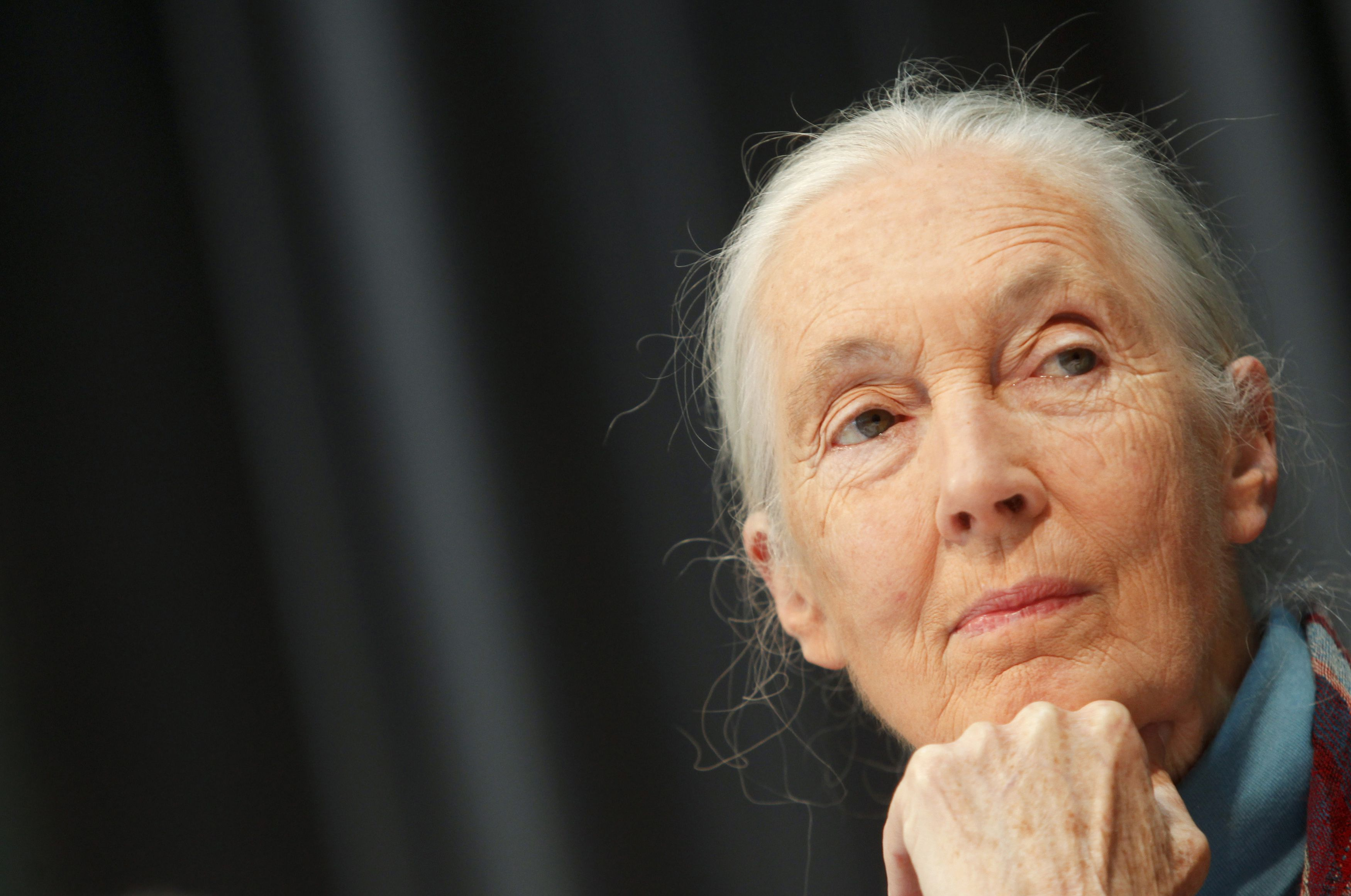 British primatologist, ethologist and anthropologist Jane Goodall listens to a journalist's question during a news conference at Vienna's Schoenbrunn Zoo June 18, 2010.  REUTERS/Herwig Prammer (AUSTRIA - Tags: SOCIETY HEADSHOT) - RTR2FC9R