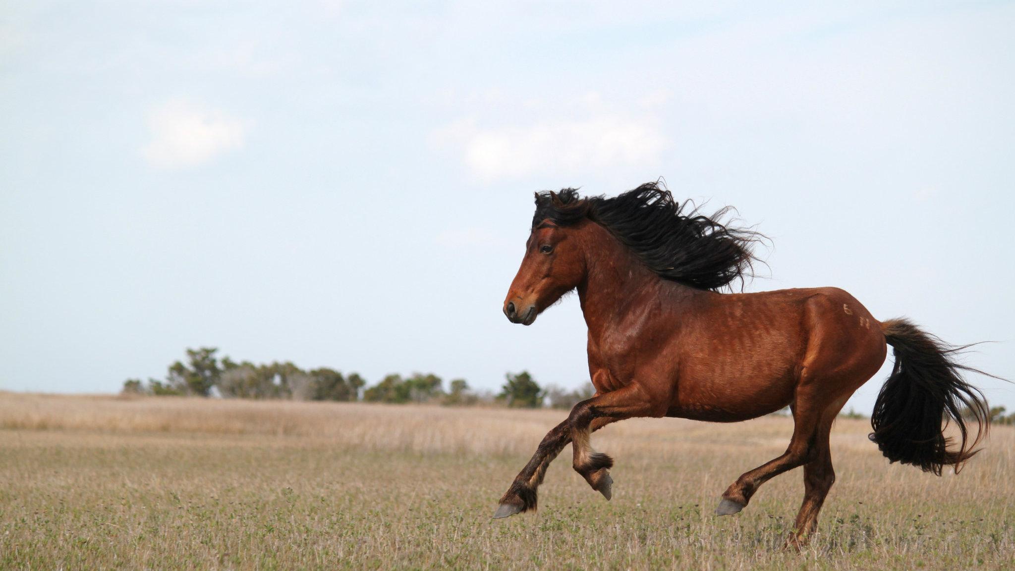 wild-horses-rolling-stones-fish-wildlife-services 2