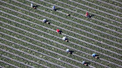 An aerial view shows field workers picking vegetables on a farm in Oxnard, California February 24, 2015.