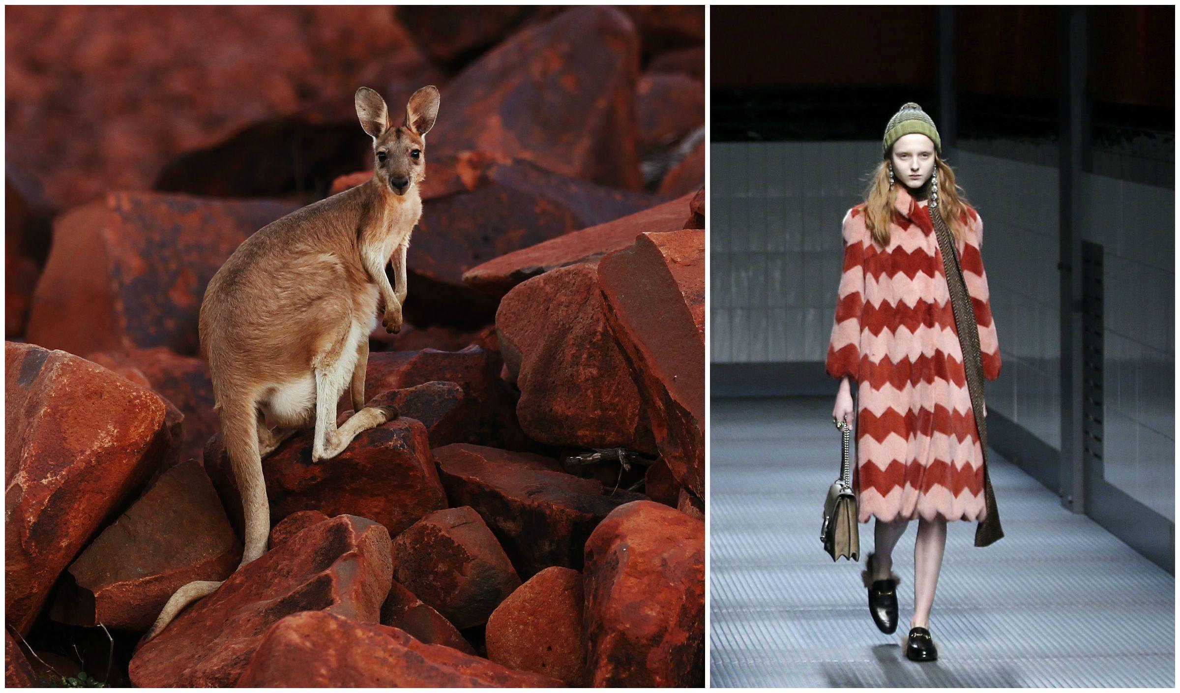 kangaroo fur, gucci fall 2015