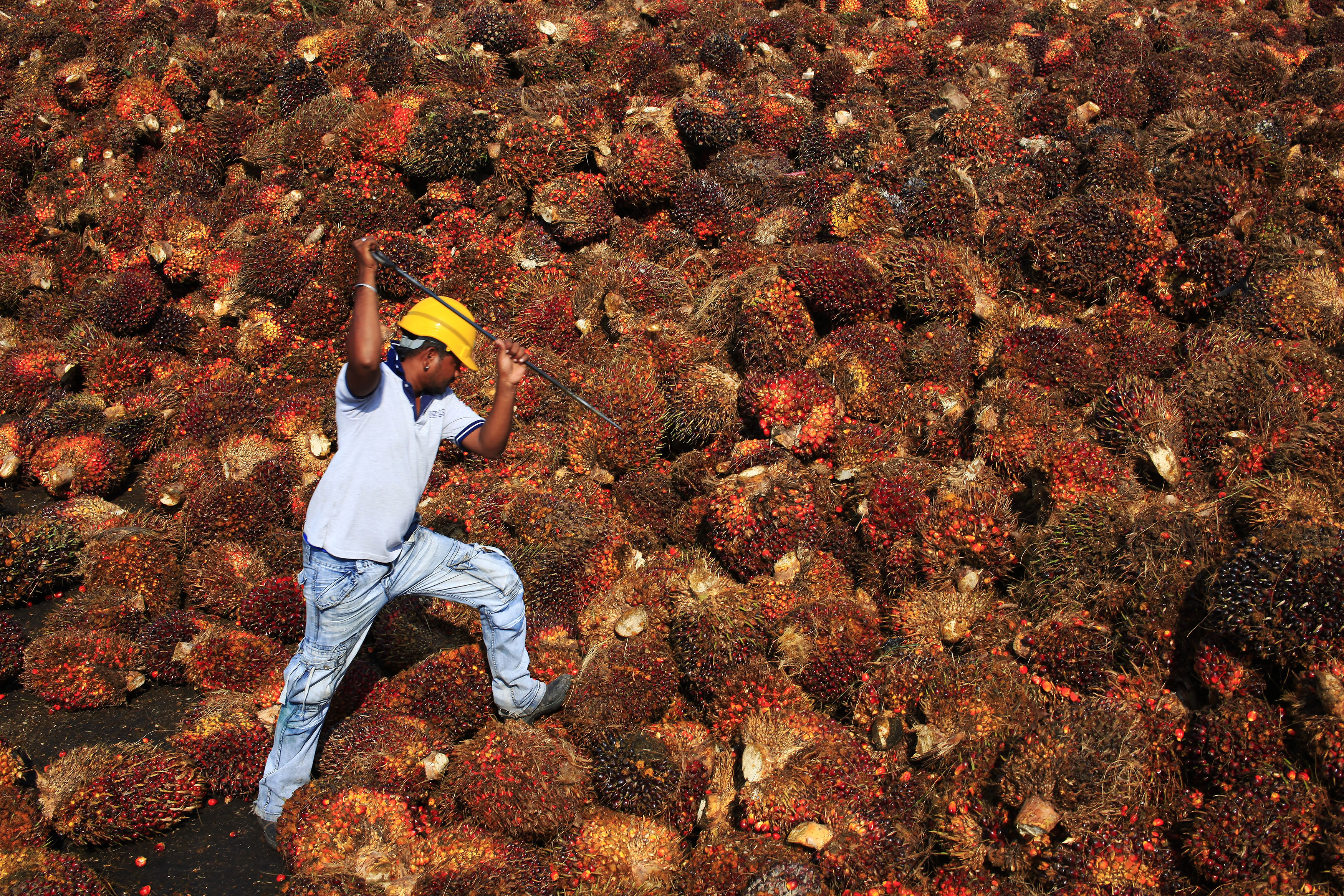 Norway's giant wealth fund decides that palm oil is terrible
