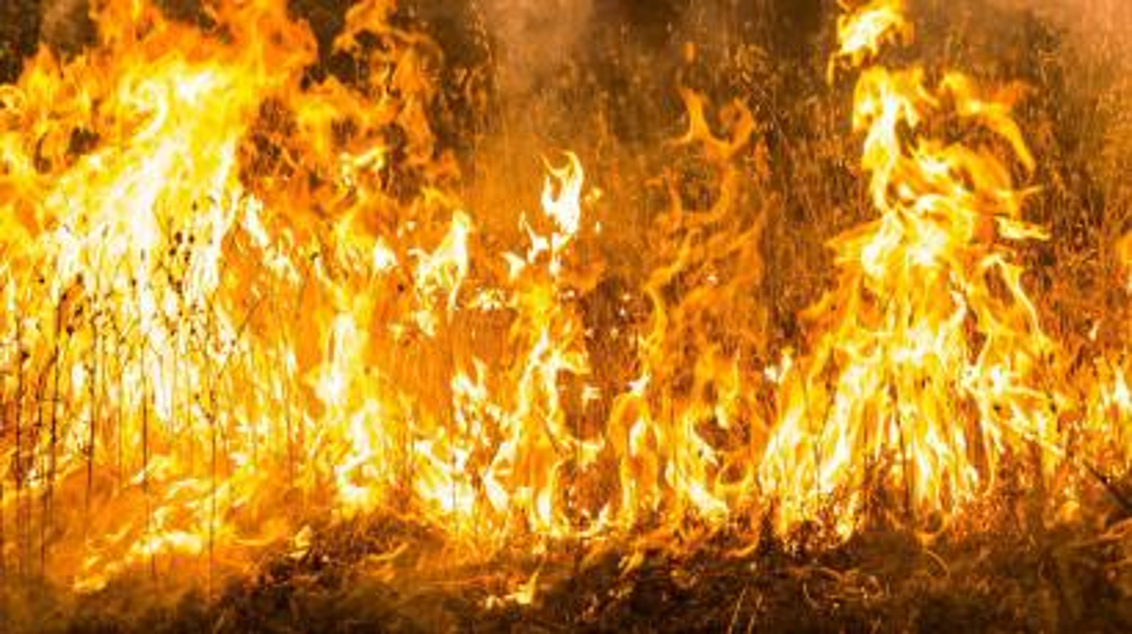 Photos 21 Wildfires Rage Throughout California Quartz