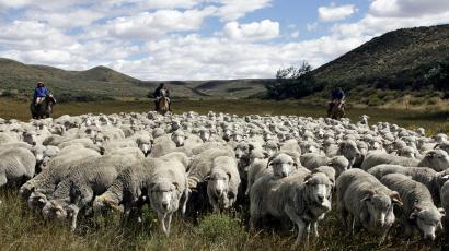 Sheep farming and wool production is one of the main activities in Argentina's Patagonia.