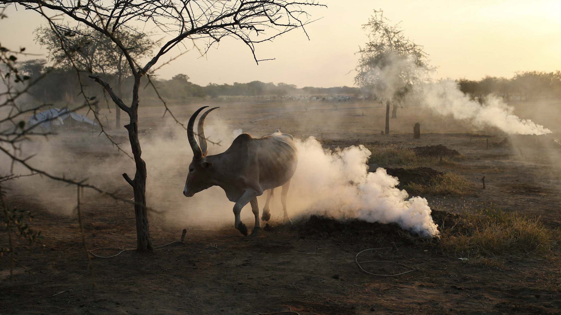 South Sudan may stop production of its first homegrown beer, White Bull.