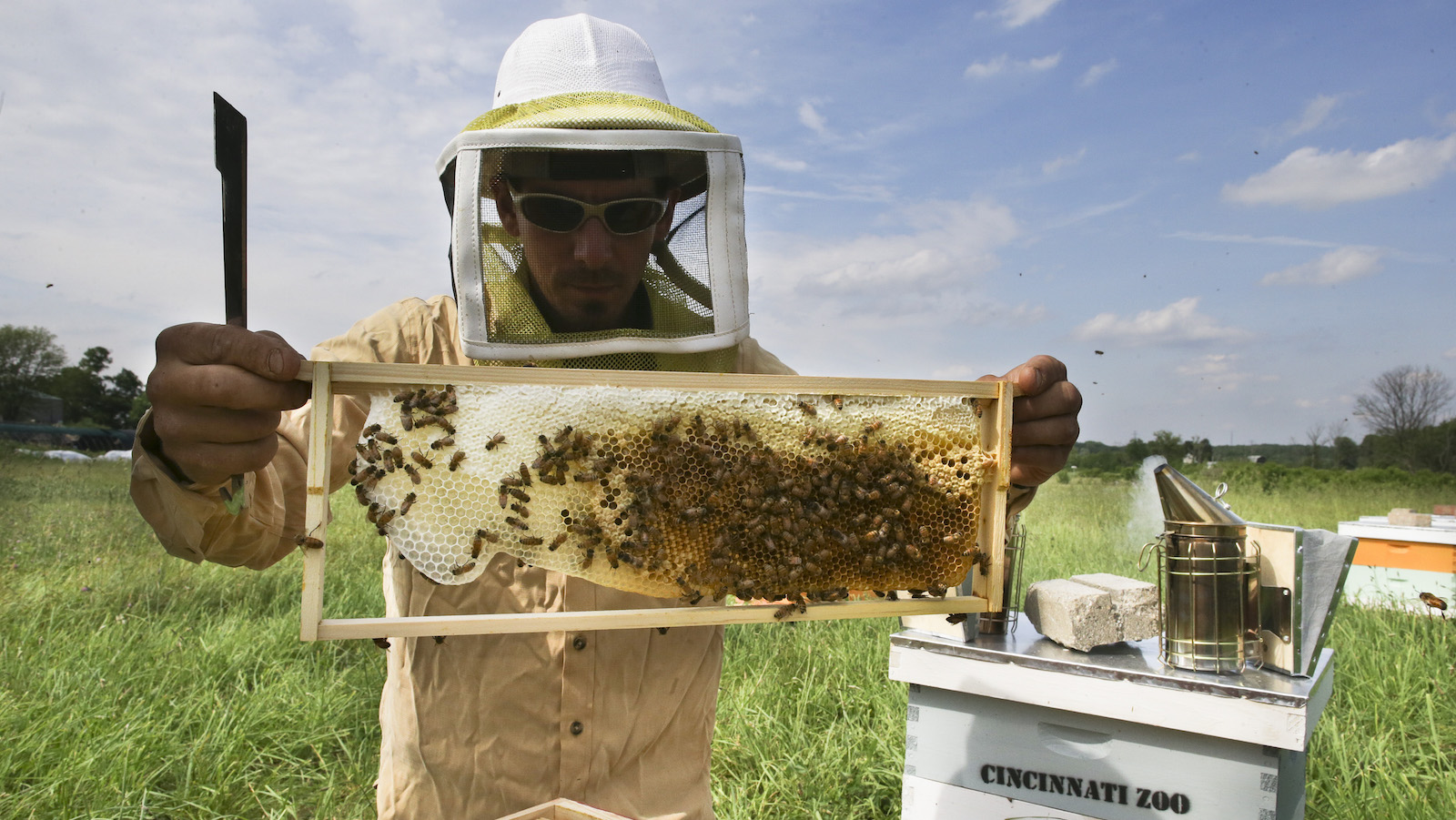 Volunteer Adam Martinez, a horticulturalist with the Cincinnati Zoo, checks honey bee hives for queen activity and performs routine maintenance as part of a collaboration between the zoo and TwoHoneys Bee Co., Wednesday, May 27, 2015, at EcOhio Farm in Mason, Ohio. A federal rule to be proposed Thursday, May 28, would create temporary pesticide-free zones when certain plants are in bloom around bees that are trucked from farm to farm by professional beekeepers, which are the majority of honeybees in the U.S.