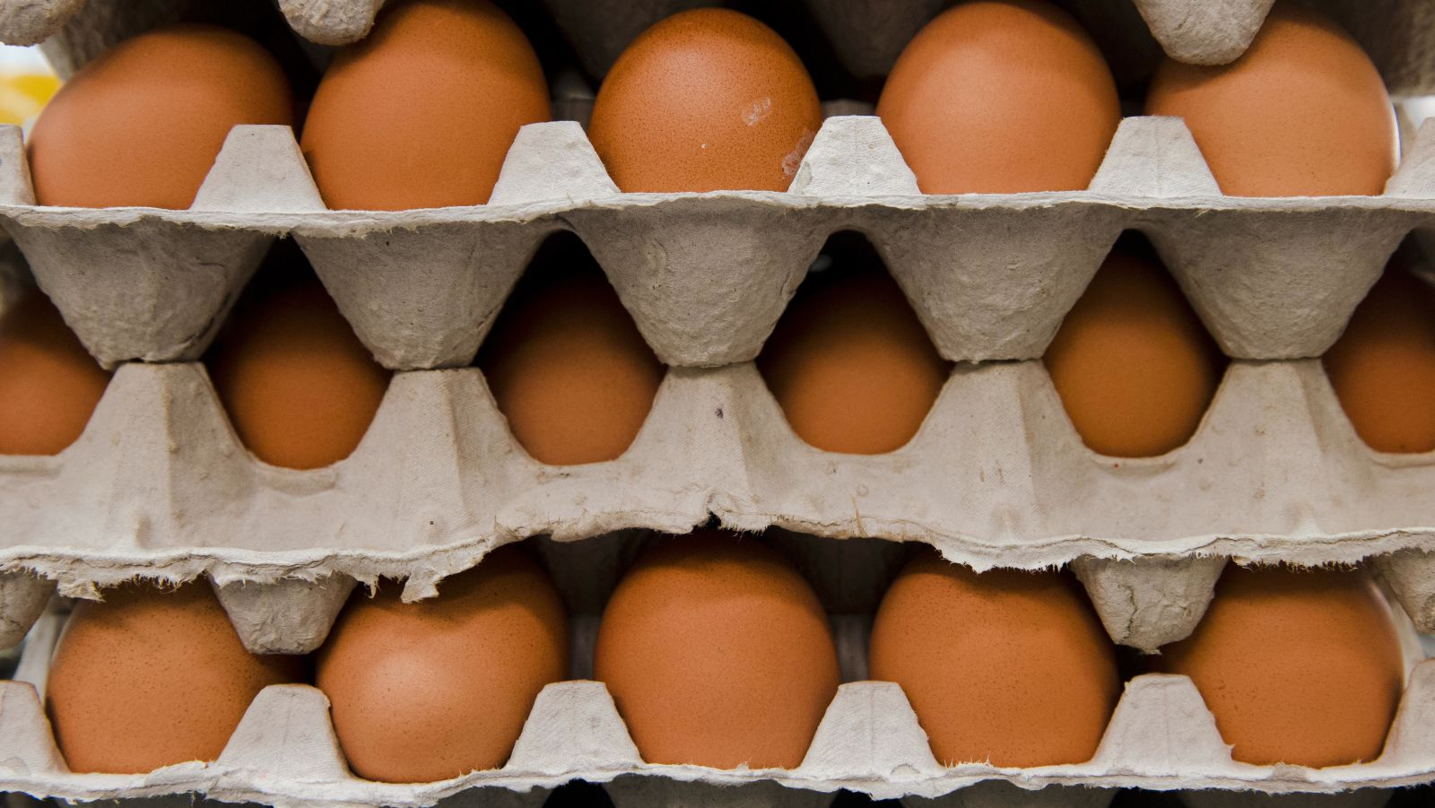 Egg-cellent living conditions? Unlikely.