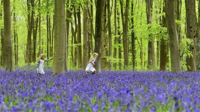 Local youngsters Bella and Daisy run through a forest covered in bluebells near Marlborough in southern...