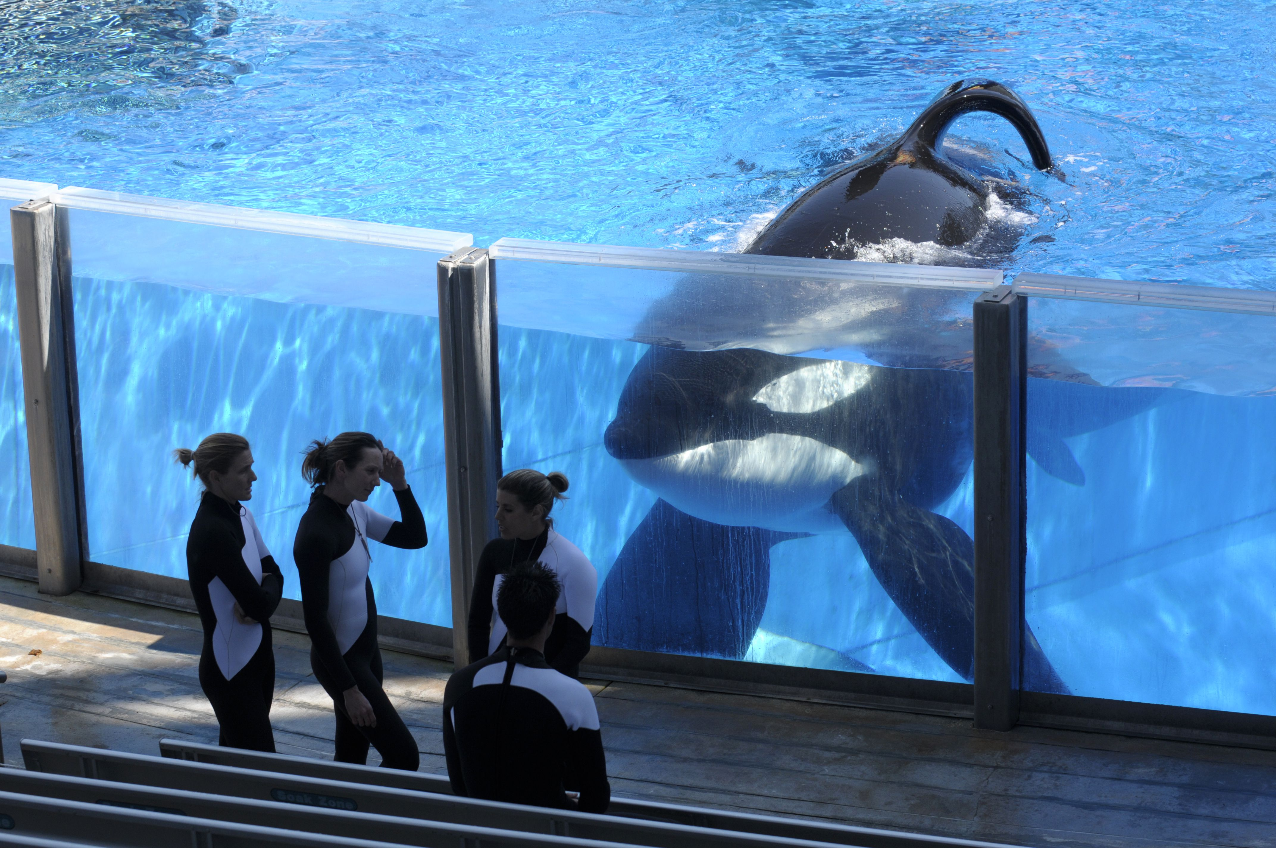 The Blackfish Effect Is Over For Seaworld For Now