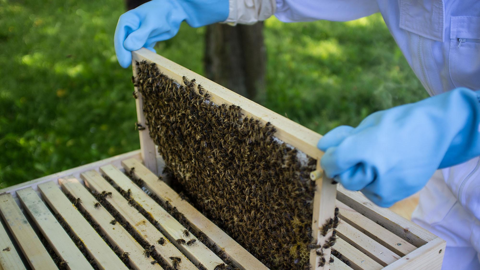 bees-antibiotic-resistance