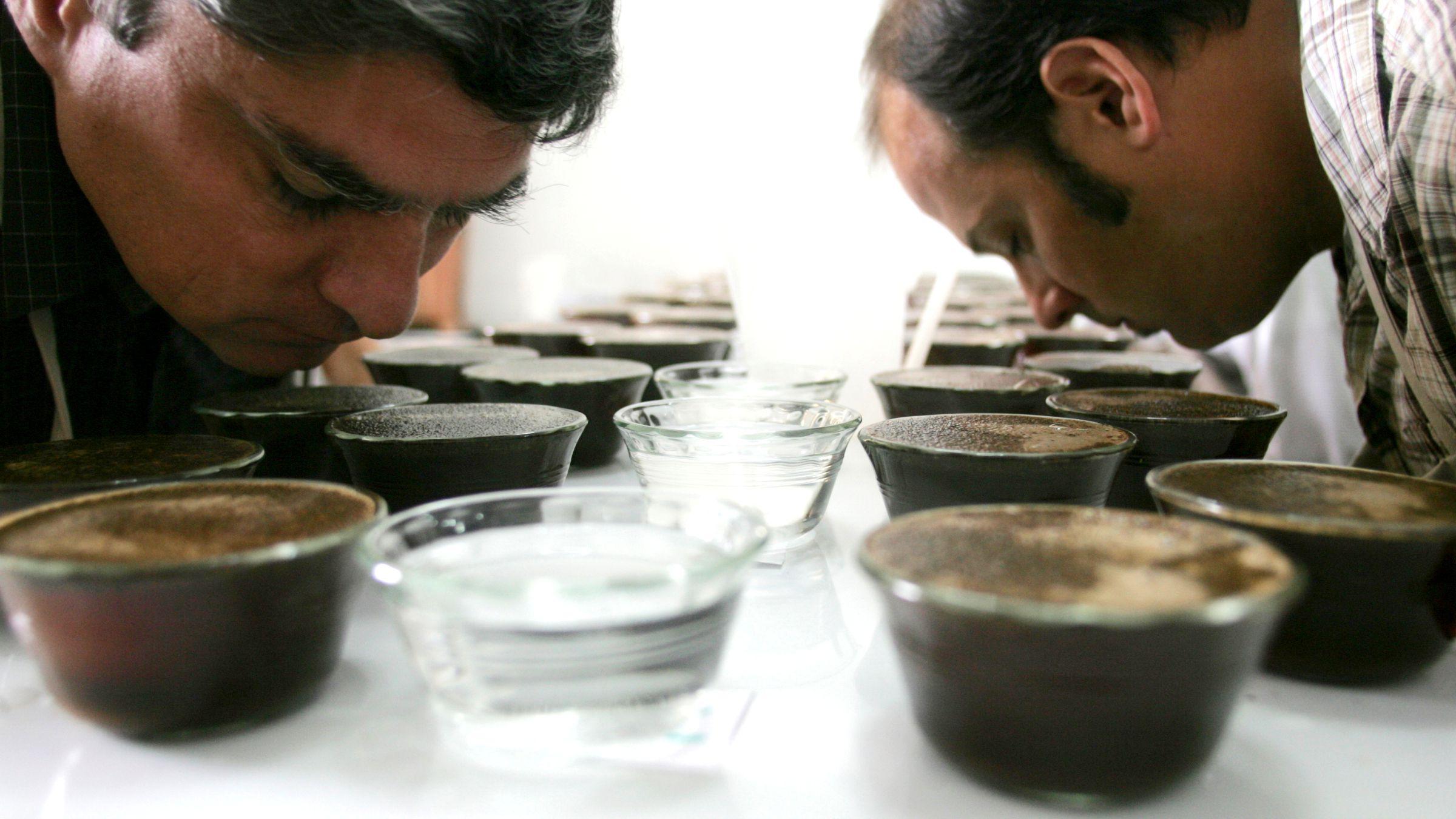 coffee-tasters 2