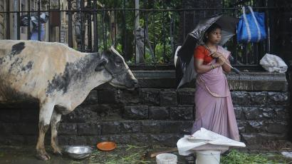 India-beef-cow