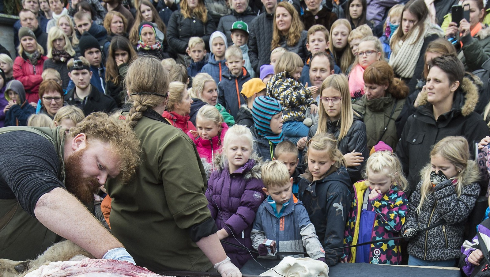 epa04978464 REPEATING TO CORRECT DATELINE  Zoo biology experts Lotte Tang Berg and Rasmus Kolind   dissect a lion in the Danish town of Padborg 15 October 2015 watched by a large crowd, mostly made up of schoolchildren.  As the animal was cut up they were given information about the many different organs.  EPA/Claus Fisker DENMARK OUT