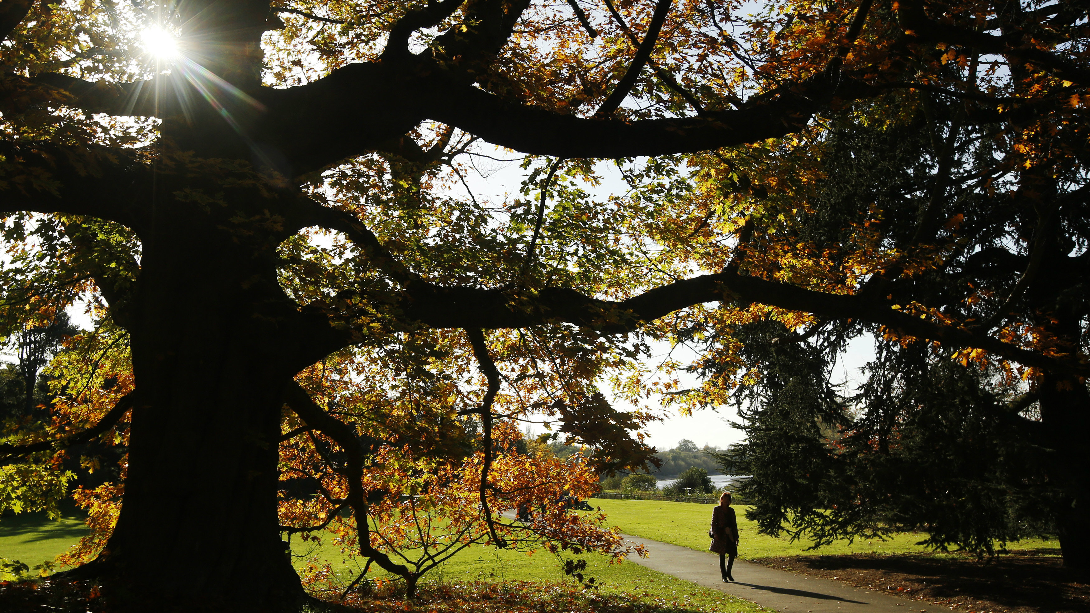 A woman walks near trees with leaves in autumn colours at Kew Gardens in west London October 27, 2014.