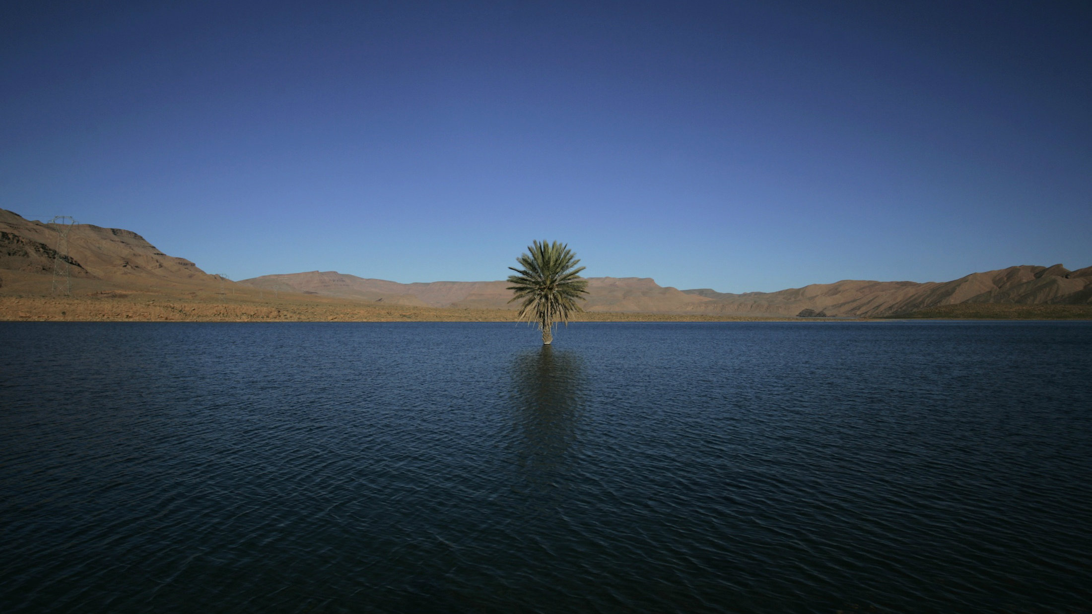 A palm tree grows in the Errachidia reservoir near the Ziz oasis in the north of the Sahara desert.