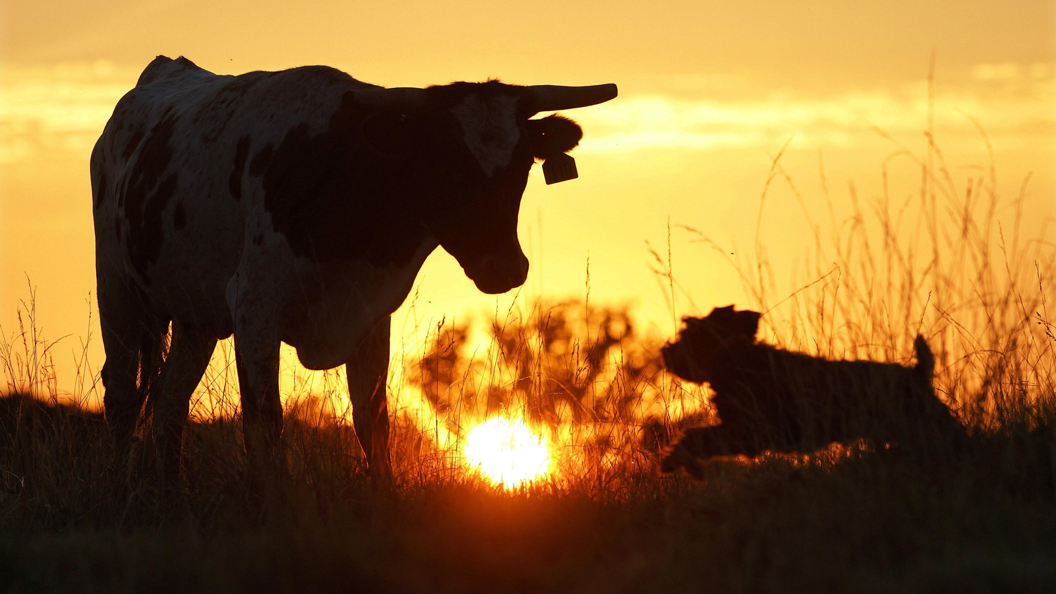 climate-change-paris-meat-food 2