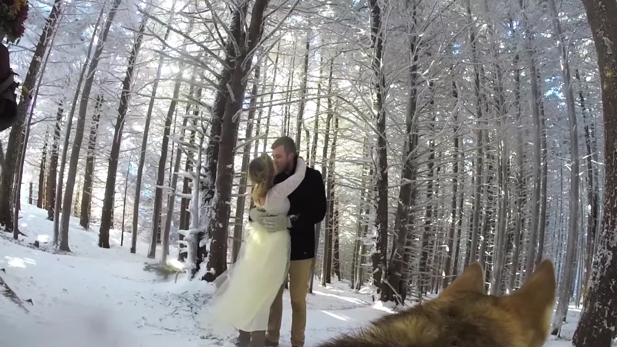 A Dog With GoPro Made The Most Amazing Wedding Video Quartz