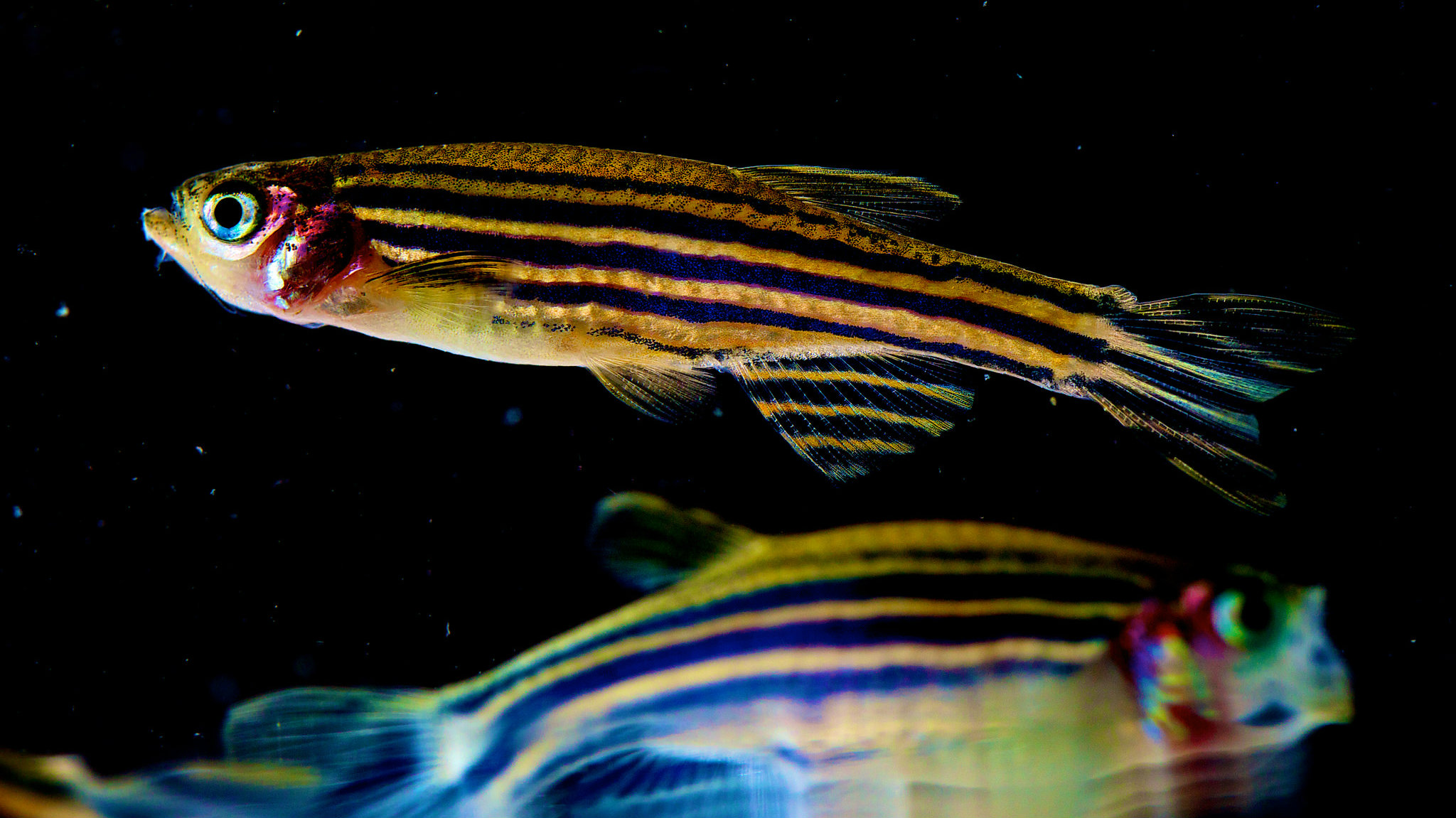 fish-feelings 2