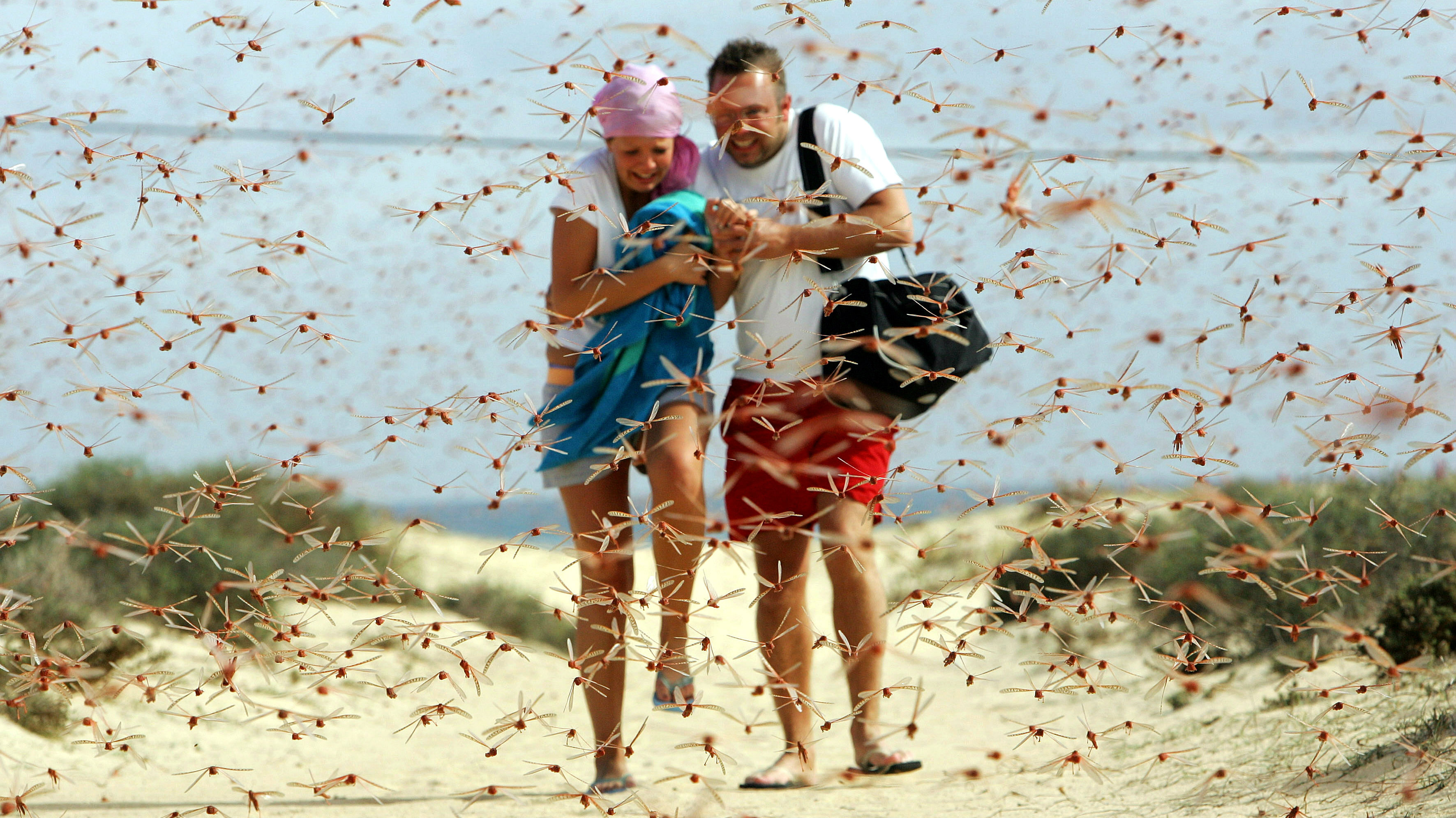 Tourists run through a swarm of pink locusts near a beach in Corralejo, on the Spanish Canary Island of Fuerteventura, November 29, 2004. Authorities in the Canaries have issued an alert as swarms of locusts arrived over the weekend from western Africa, with environmental experts estimating that some 100 million of the insects have reached the Canaries. Aid agencies claim that the locusts have destroyed up to a third of the crop in African countries affected by the locust plague.