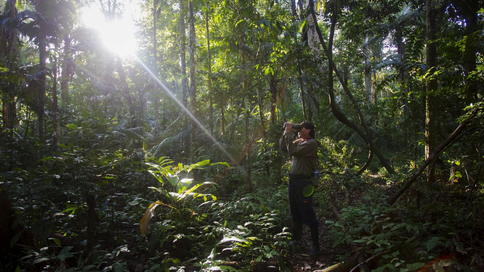 A tourist guide searches for monkeys at the Manu National Park in Peru's southern Amazon region of Madre de Dios July 17, 2014. This 1.8 million hectares reserve is the largest National Park in Peru and is the home of about 1000 birds species and 200 mammals species among other animals, as reptiles and amphibians, and has one of the highest levels of biodiversity of any park in the world, with more than 200 varieties of trees found in one hectare. Picture taken July 17, 2014. REUTERS/Enrique Castro-Mendivil (PERU - Tags: ENVIRONMENT TRAVEL SOCIETY TPX IMAGES OF THE DAY) - RTR40FT3