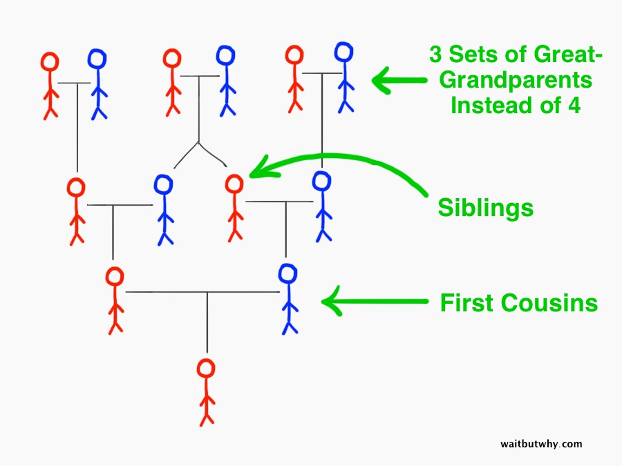 Dating your third cousin rd