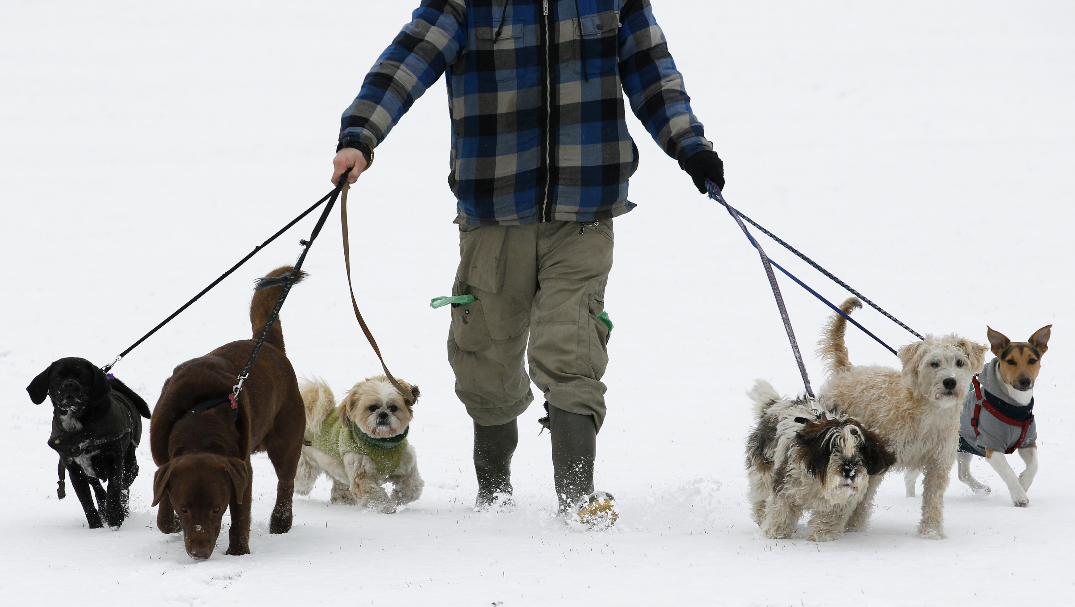 Dog walker Josh Williams walks in the snow on Hackney Marshes in east London December 1, 2010. British gas and power prices soared early on Wednesday as a cold snap elevated demand for heating and as neighbouring markets required imports from Britain to meet their own high energy consumption.    REUTERS/Luke MacGregor   (UNITED KINGDOM - Tags: ENVIRONMENT POLITICS SPORT SOCCER) - RTXV9U7