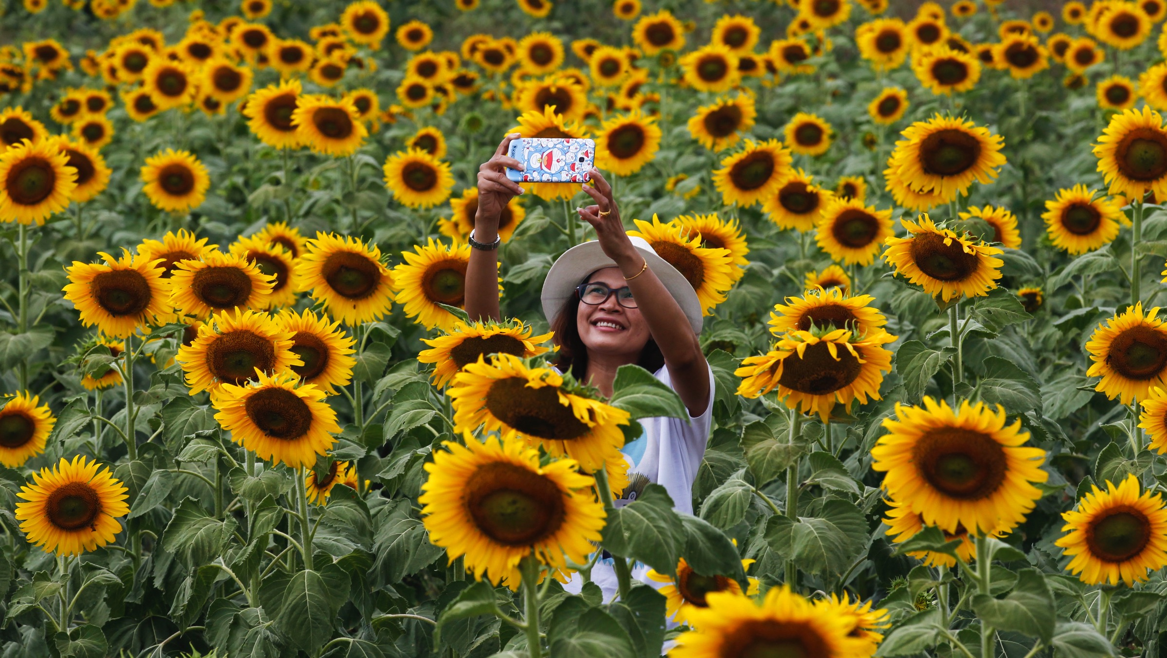 """A woman takes a """"selfie"""" at a sunflower field in Lopburi province, north of Bangkok"""