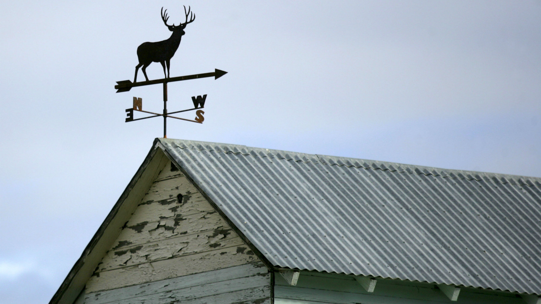 ** ADVANCE FOR WEEKEND OF NOV. 26-27 ** An elk weather vane is shown on top of a shed belonging to wheat farmer Bud Hamilton near Prosser, Wash., Tuesday, Nov. 15, 2005. To folks driving by, the massive elk roaming freely across south-central Washington's rugged, sagebrush-dotted federal land are a delightful sight. To hunters, they are an enticing target that can't be touched. For Hamilton, a farmer whose property abuts the Hanford Reach, the large stands of elk pose a bust to his crop. (AP Photo/Jackie Johnston)