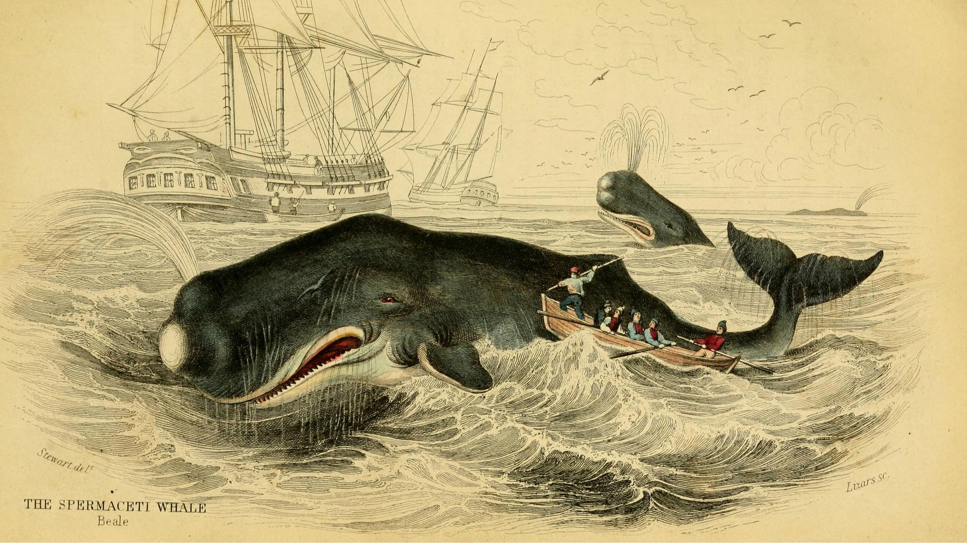 """How realistic are the vengeful whales of """"Moby-Dick"""" and """"In the"""