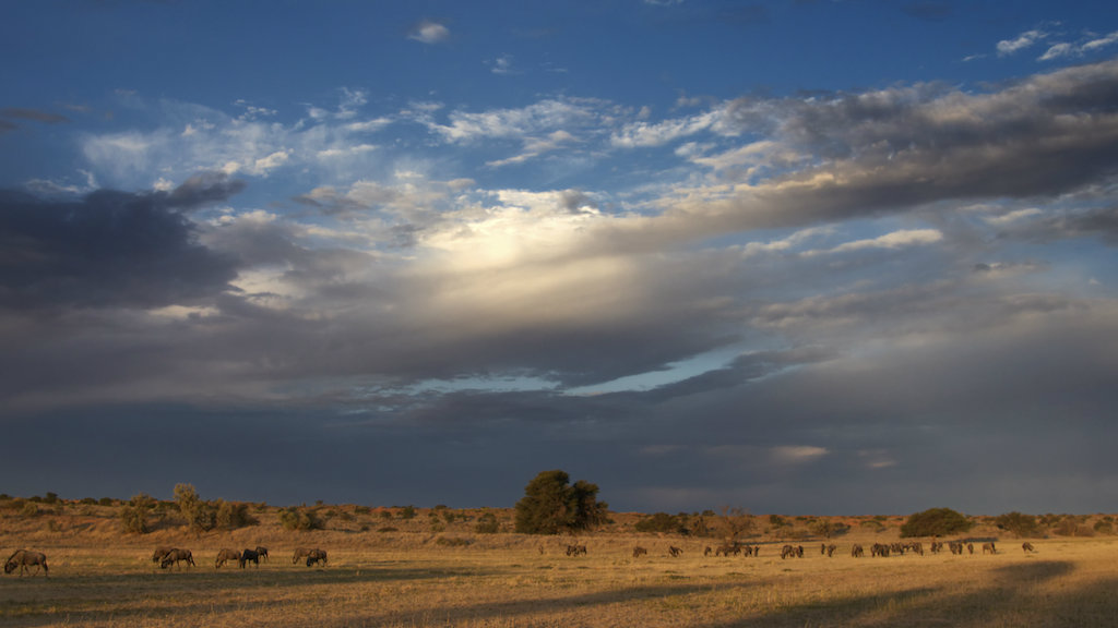 The government of Botswana has reportedly sold fracking rights in the Kgalagadi Transfrontier Park.