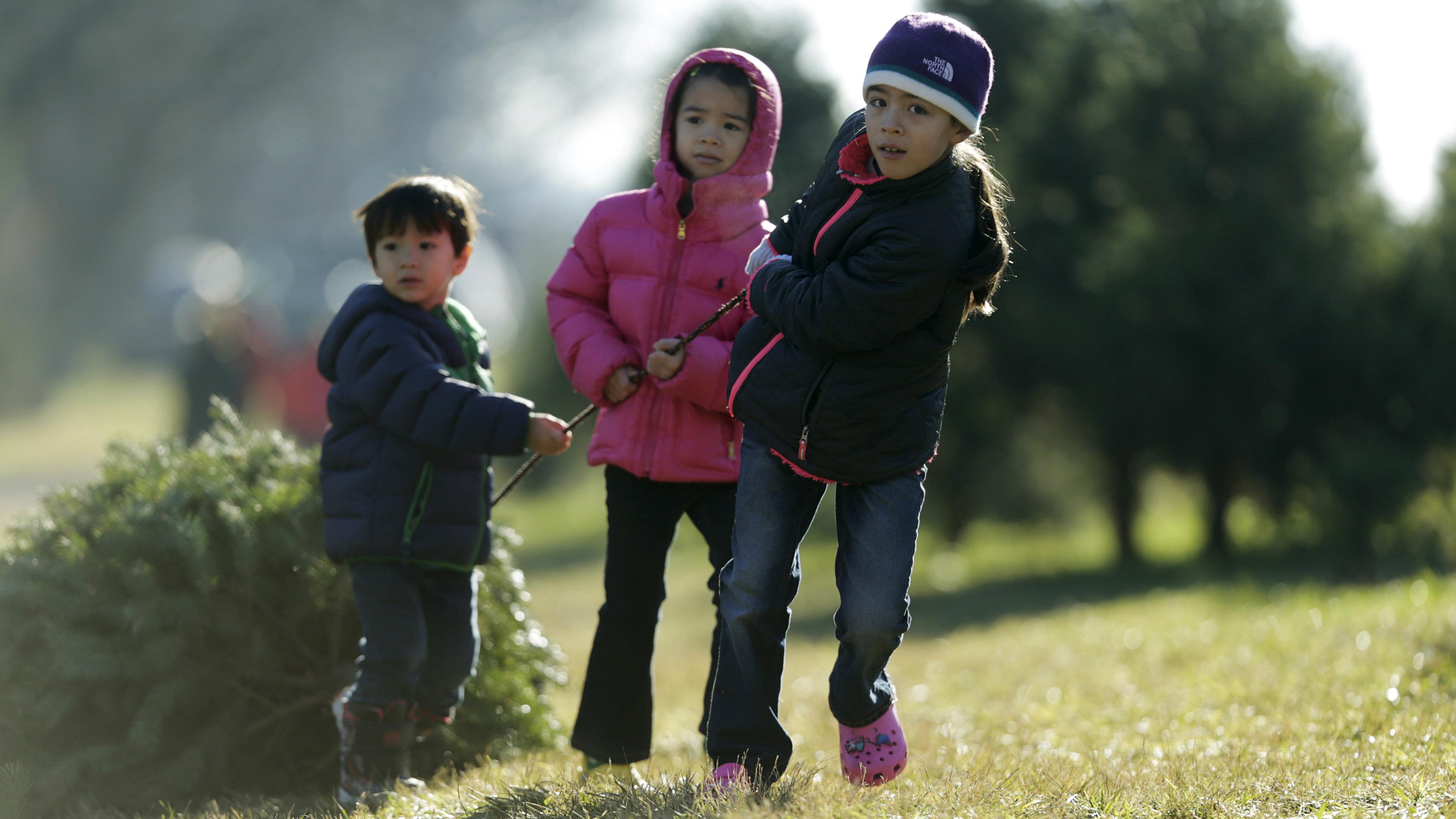 kids dragging tree