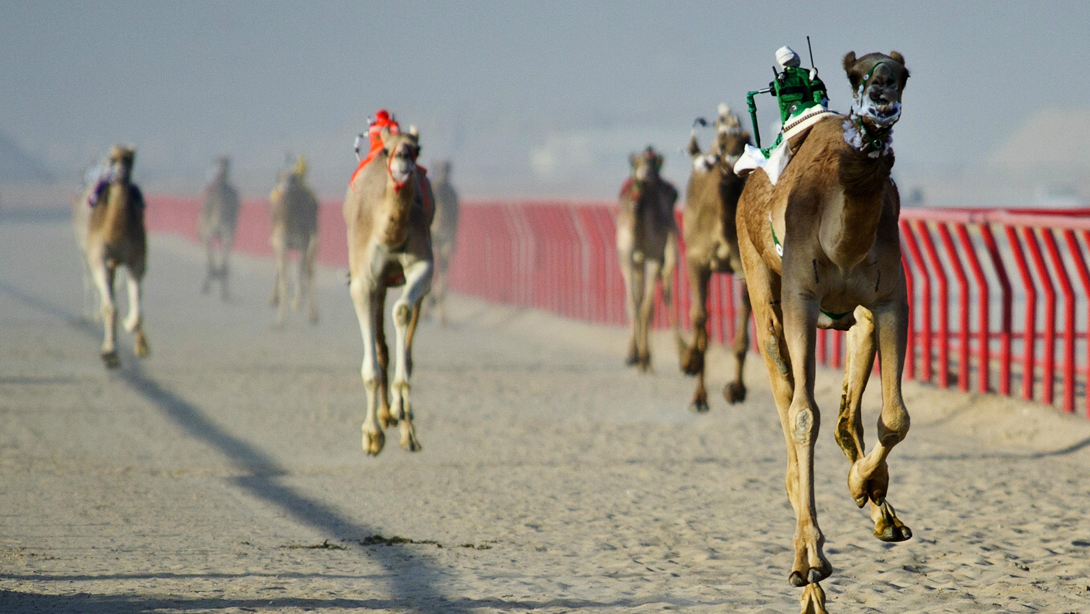 Robots on camels